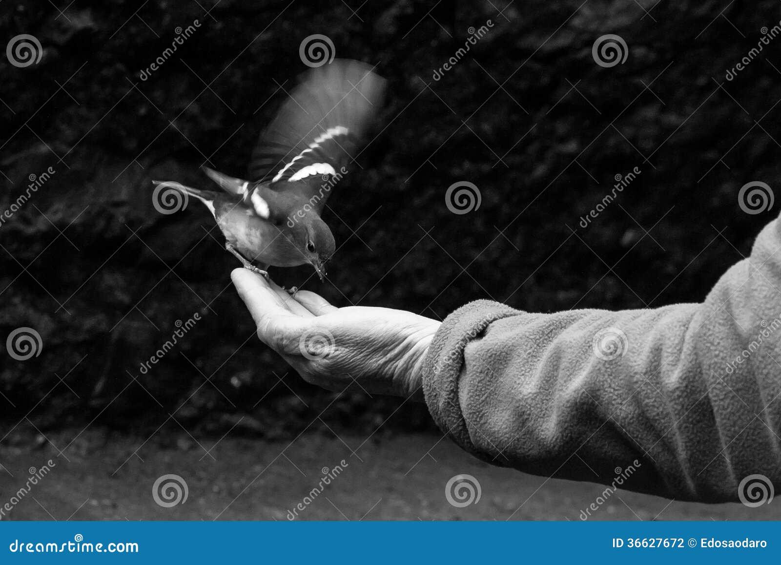 Pássaro à disposição