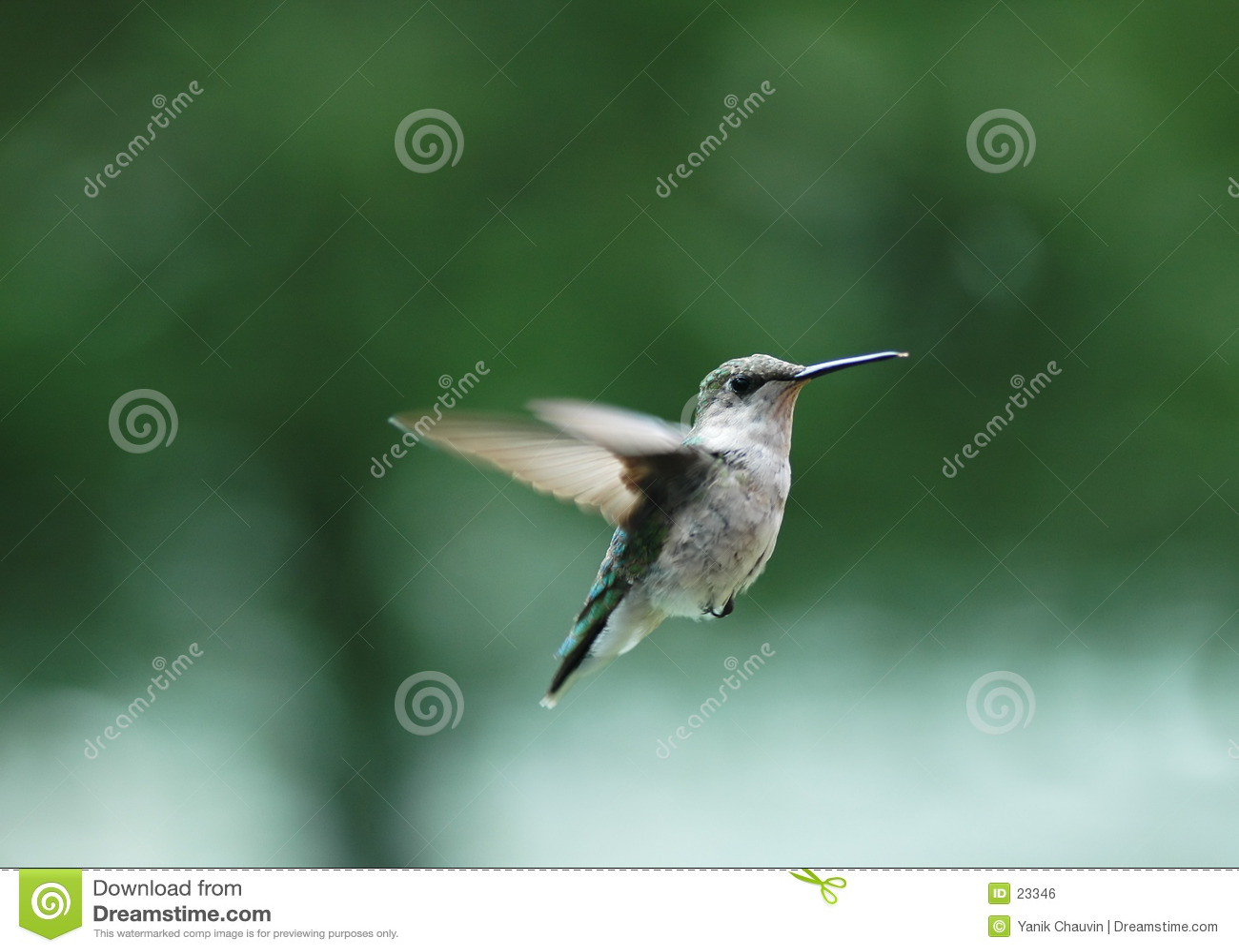 Pássaro 2 do zumbido