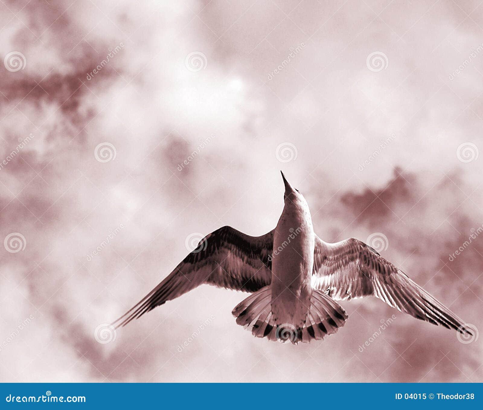 Pássaro com asas abertas