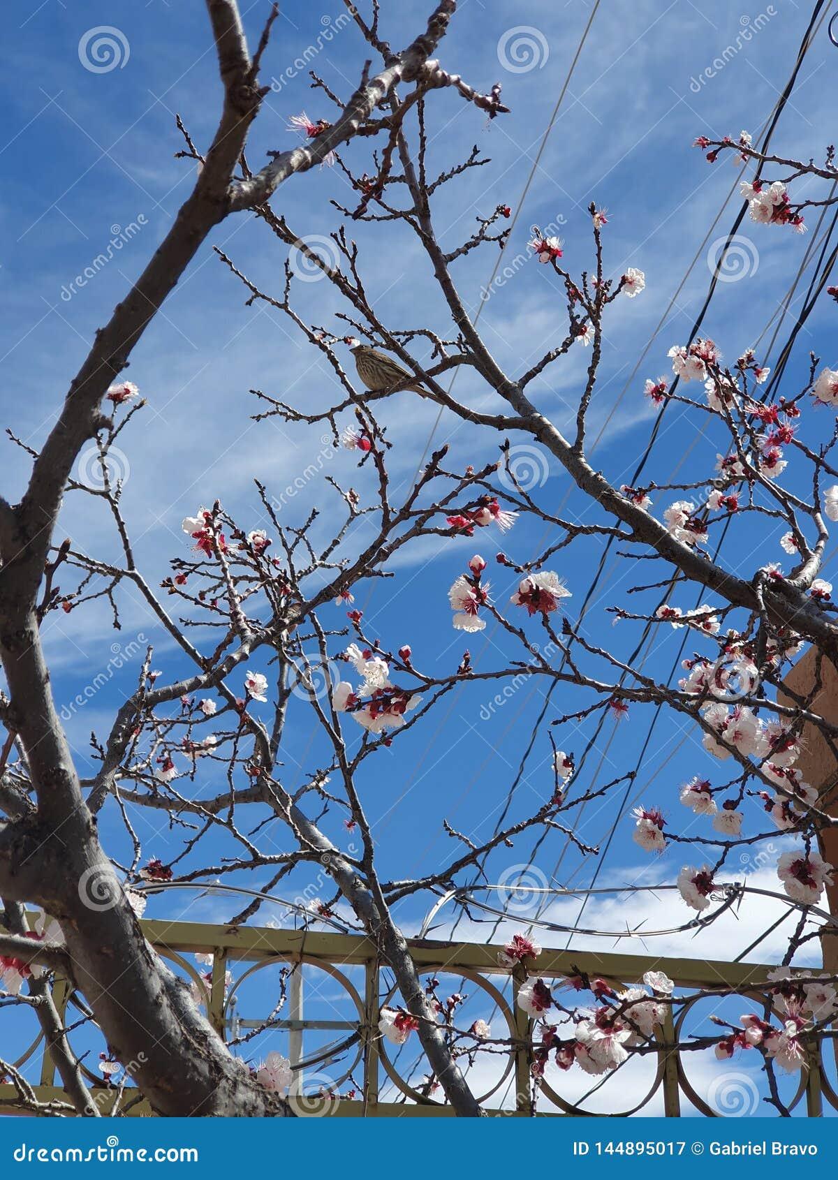 Pássaro cor-de-rosa da árvore