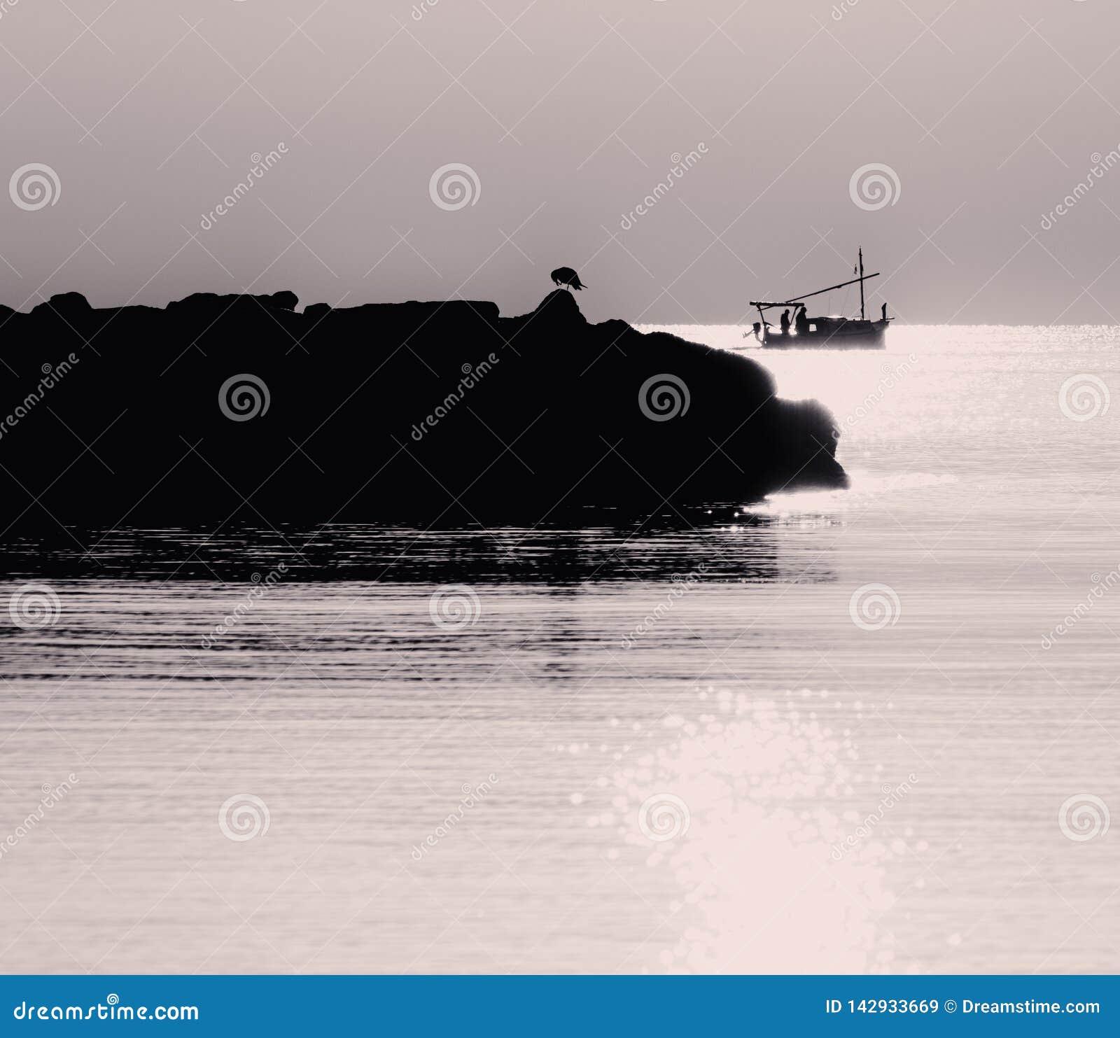 Pássaro da gaivota mostrado em silhueta em rochas com o barco de pesca no fundo banhado na luz dourada bonita do nascer do sol, b