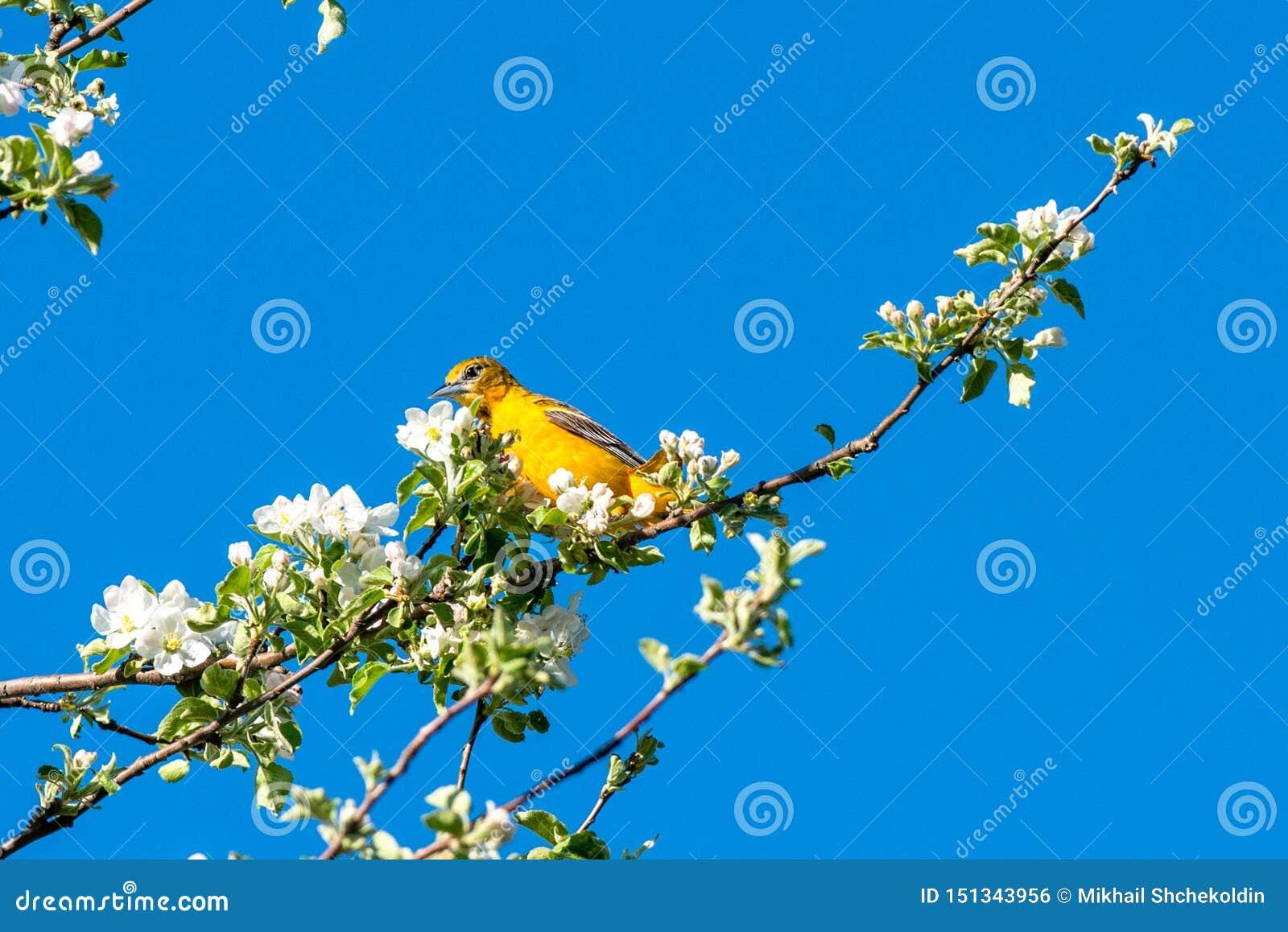 Pássaro da mola em um galho Opinião agradável da mola do prazer