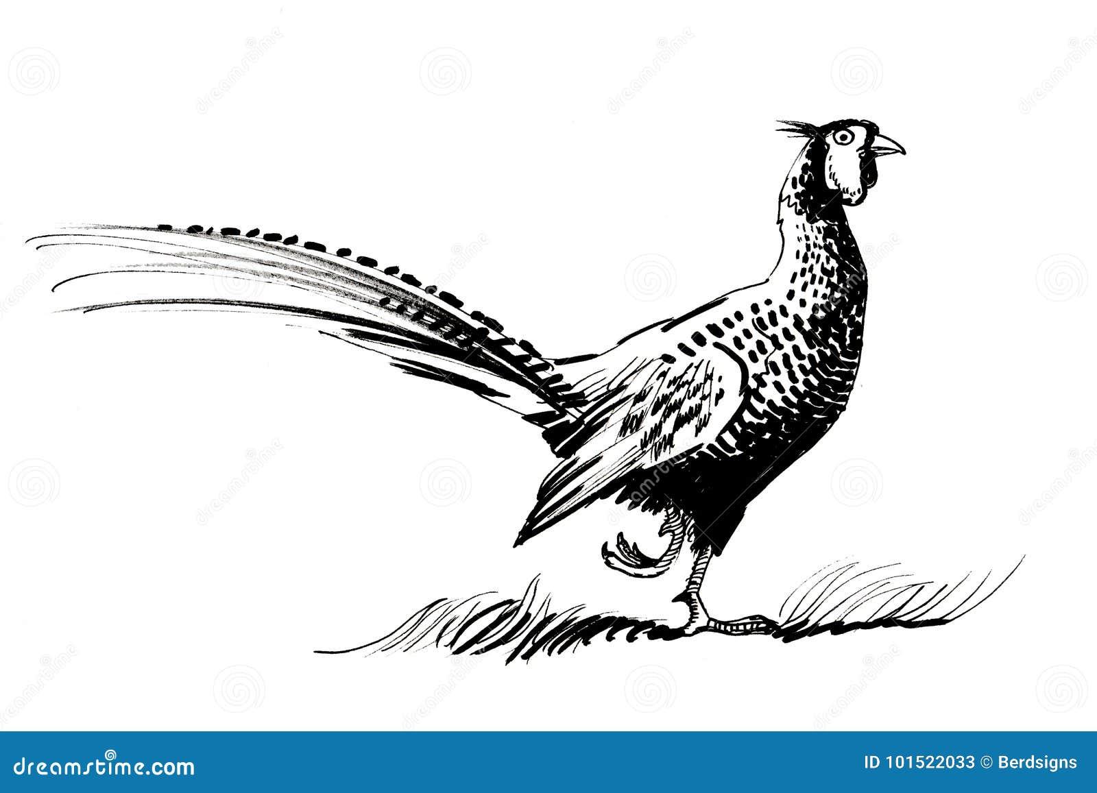 Pássaro do faisão