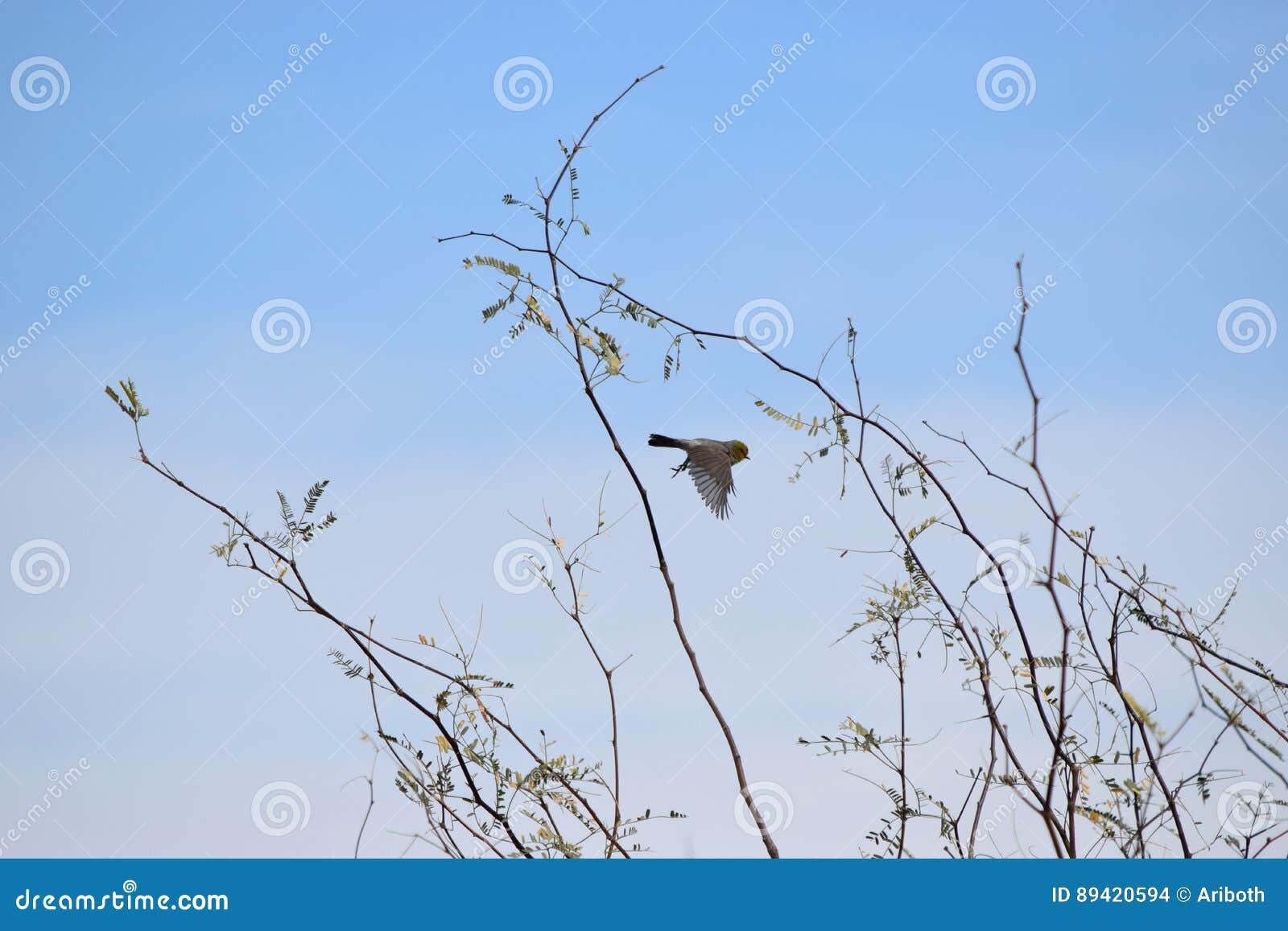 Pássaro em voo acima de uma árvore