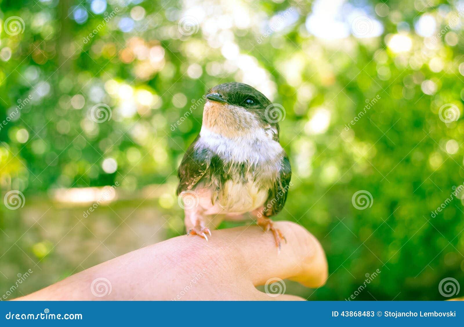 Pássaro na mão