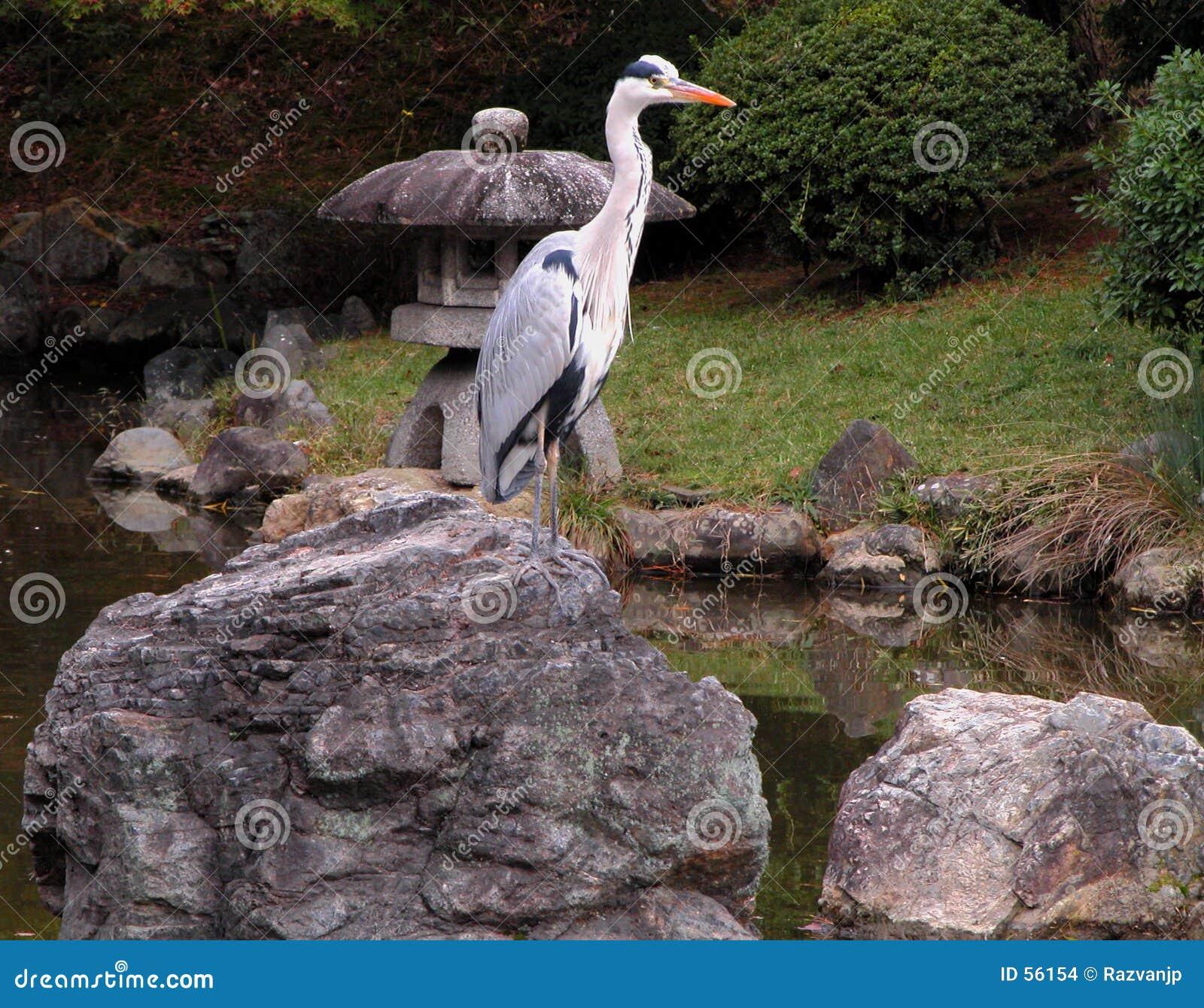 Pássaro no jardim de pedra