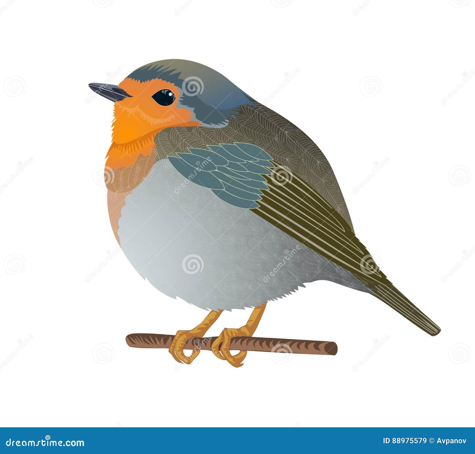 Pássaro pequeno isolado