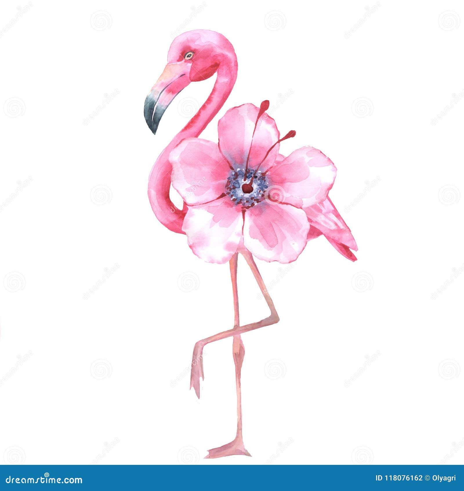 pássaro tropical flamingo cor de rosa aquarela 1 ilustração stock