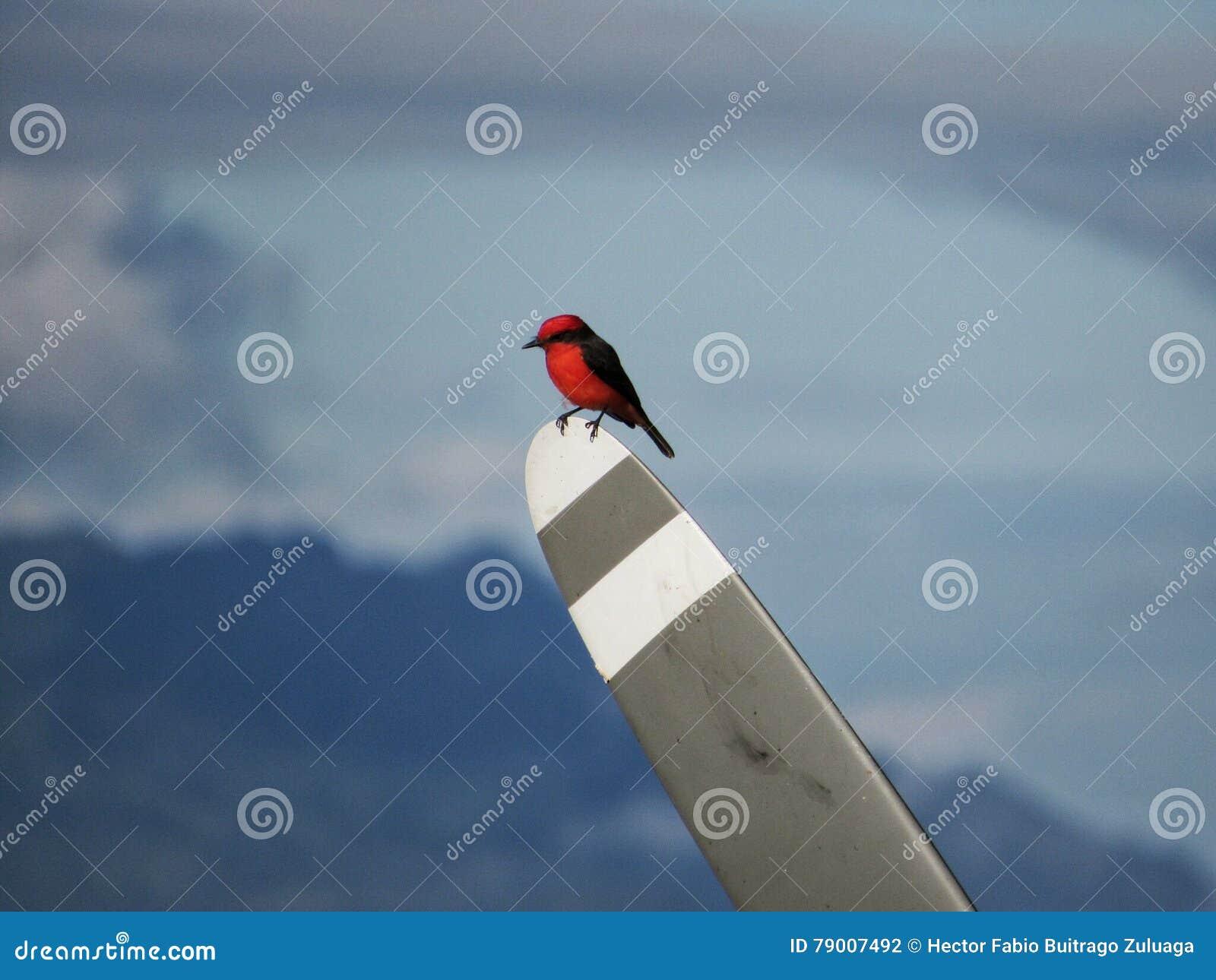 Pássaro vermelho com hélice