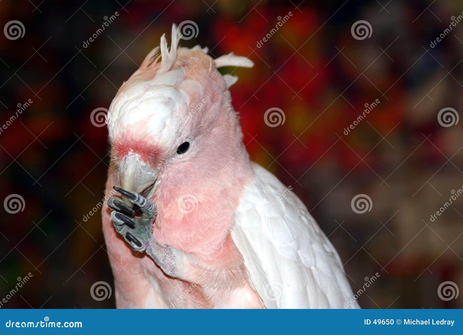 Pássaros #1