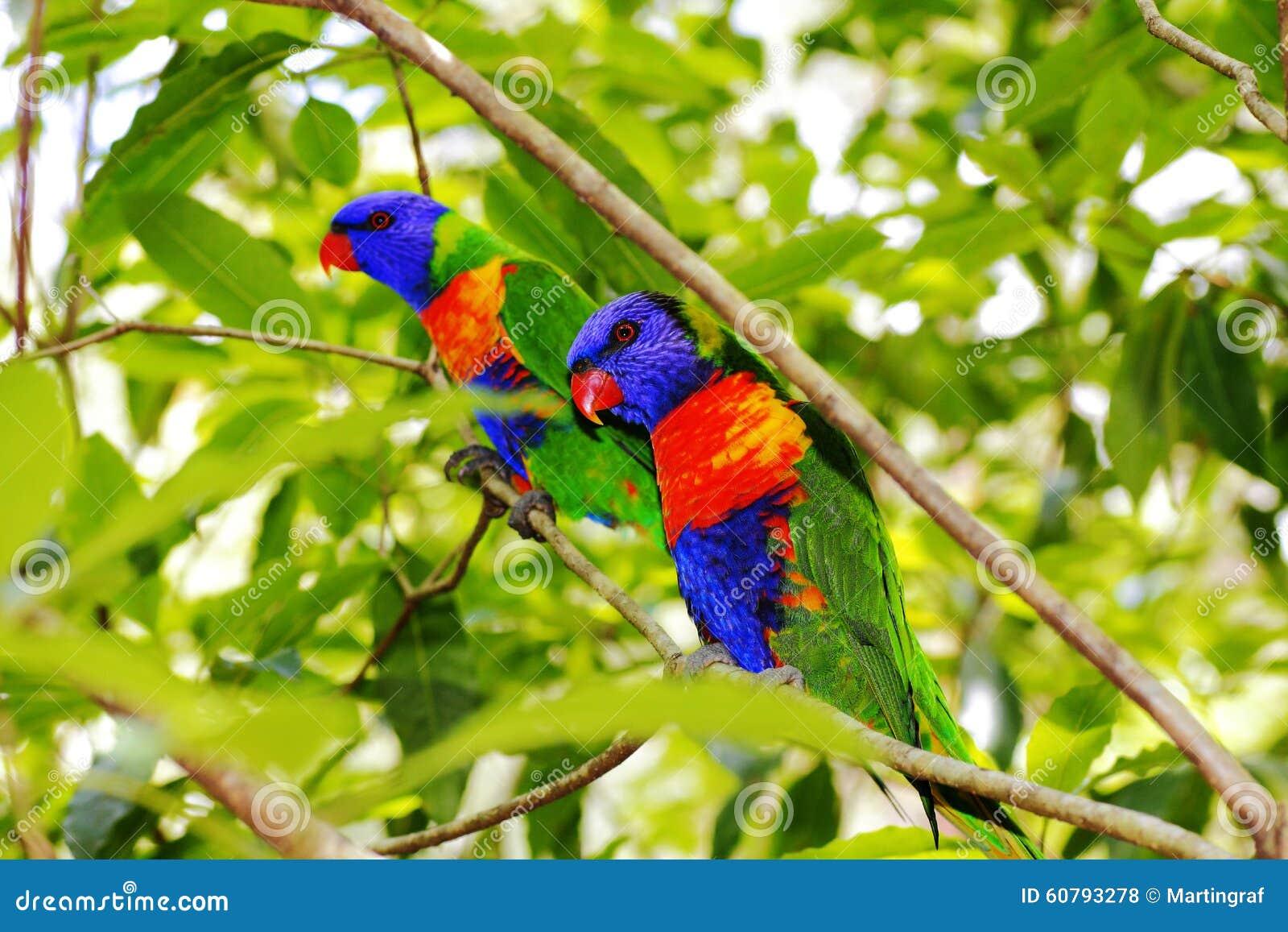 Pássaros coloridos nas folhas verdes