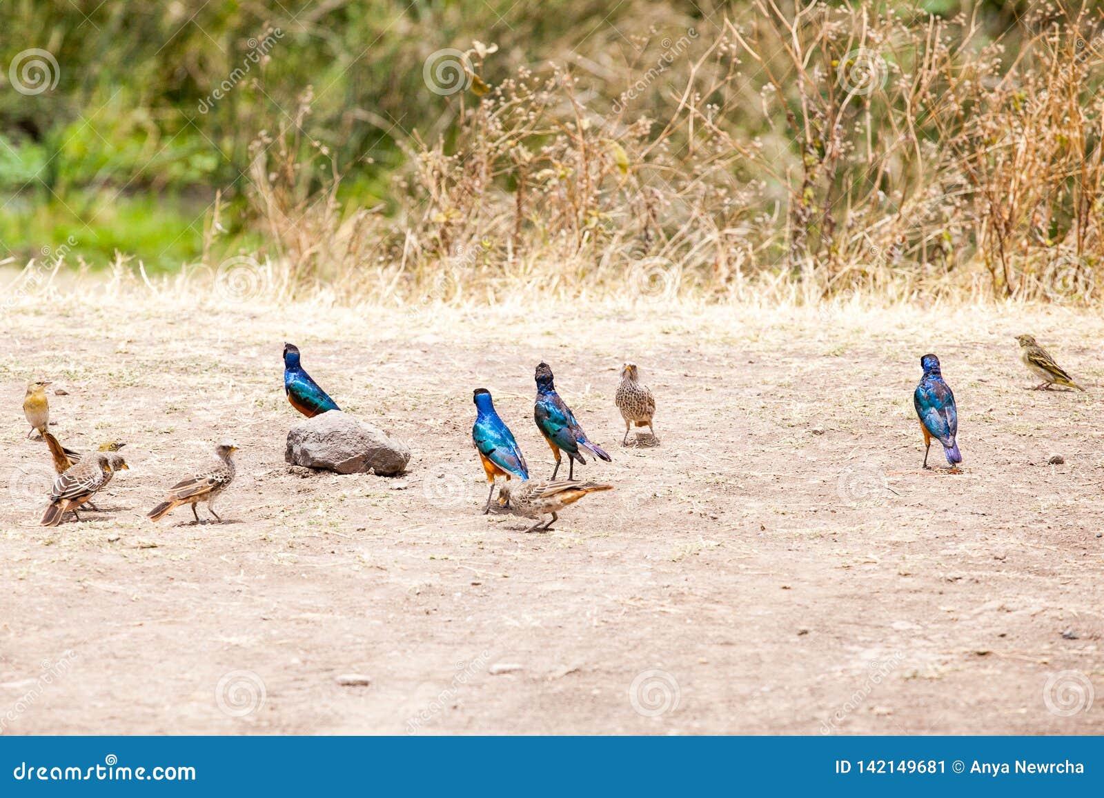 Pássaros coloridos que estão na costa de um lago antigo