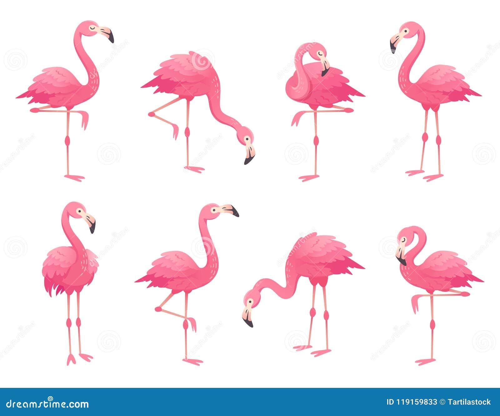 Pássaros cor-de-rosa exóticos dos flamingos O flamingo com penas cor-de-rosa está em um pé Vetor rosado dos desenhos animados do
