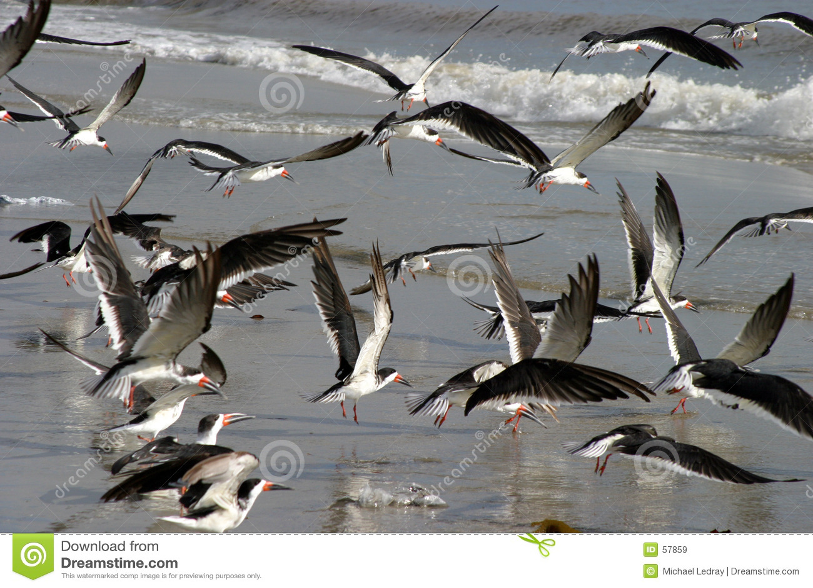 Pássaros de mar