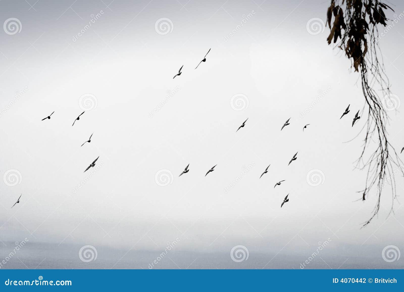Pássaros de vôo