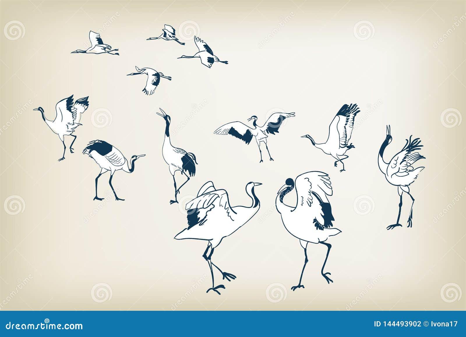 Pássaros japoneses do vetor do esboço do pássaro do guindaste da dança