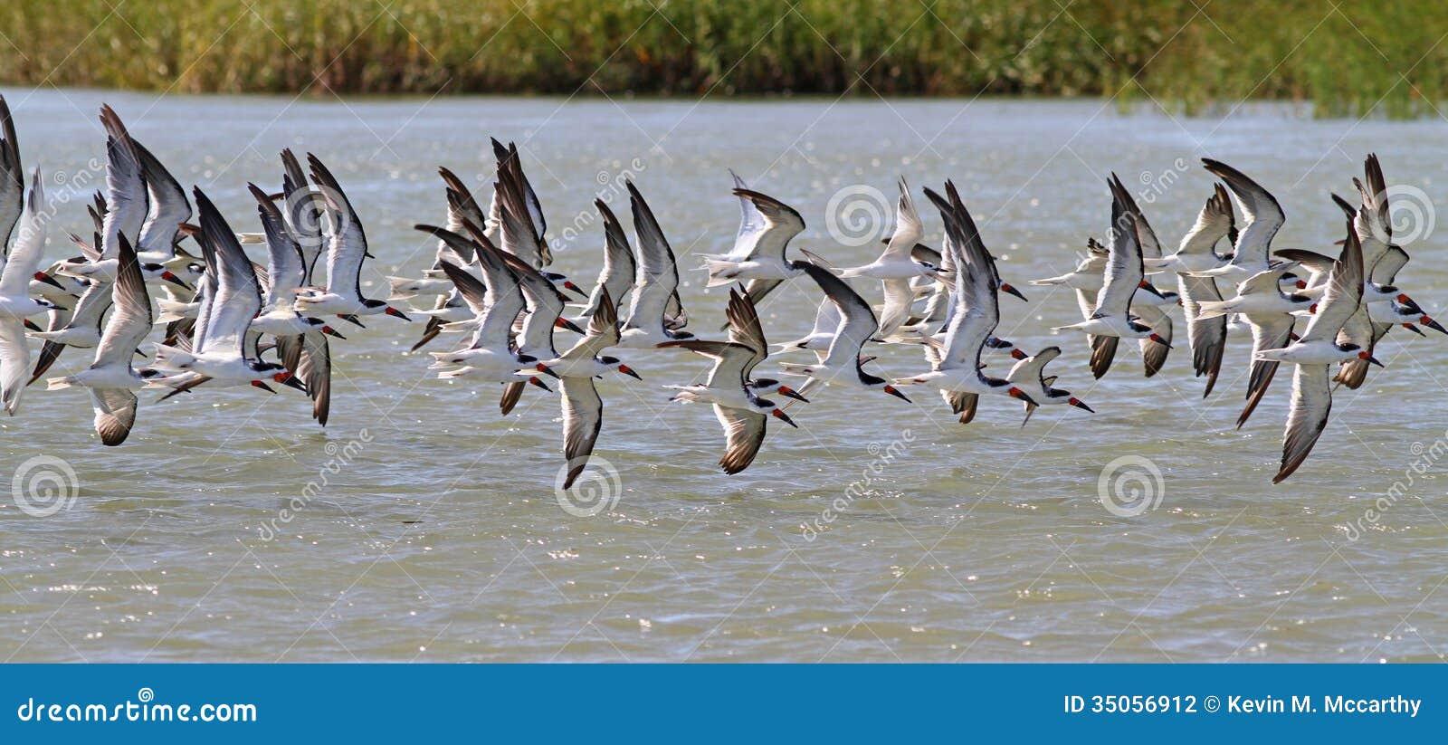Pássaros na asa