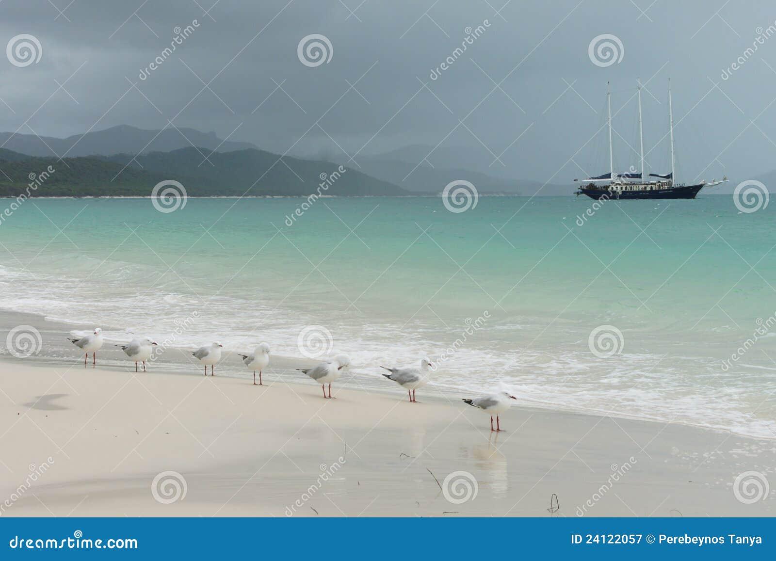 Pássaros na praia em Austrália