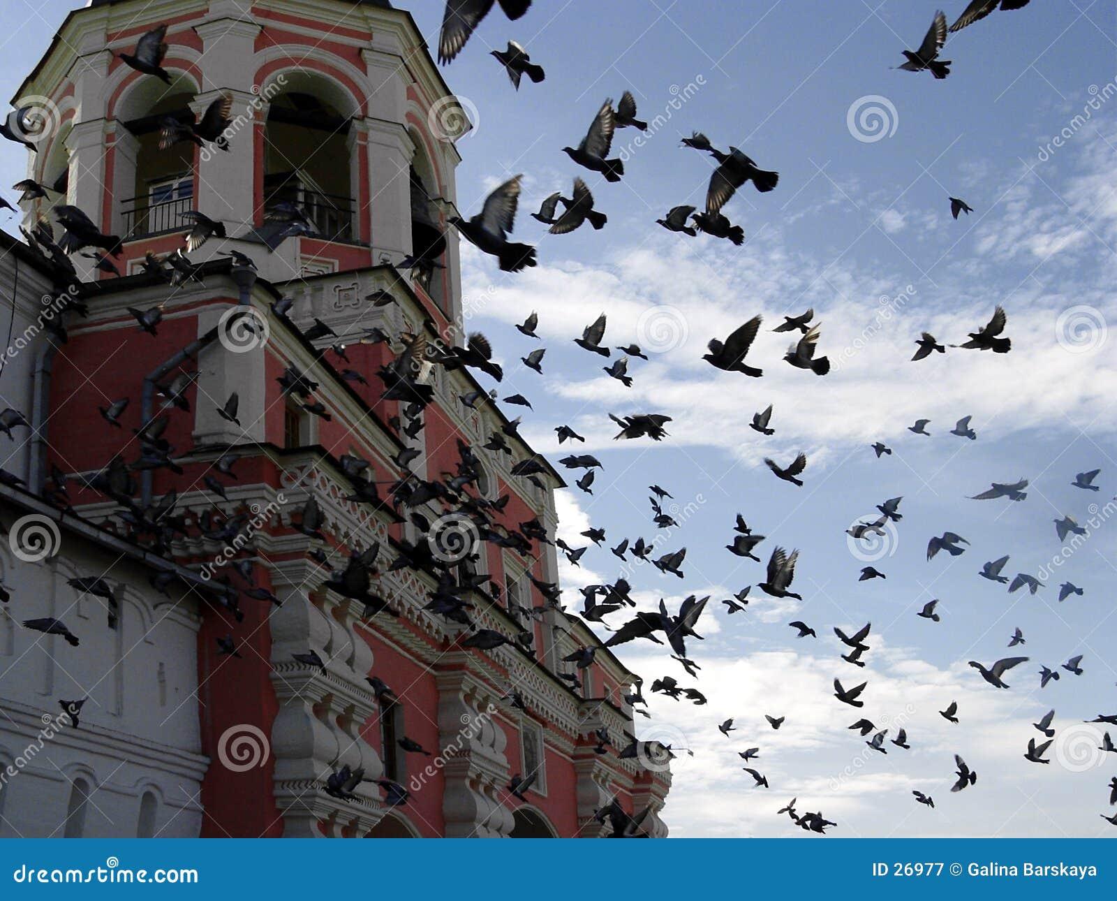 Pássaros no monastério de Danilov
