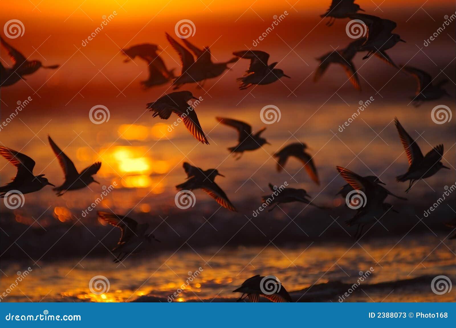 Pássaros no por do sol