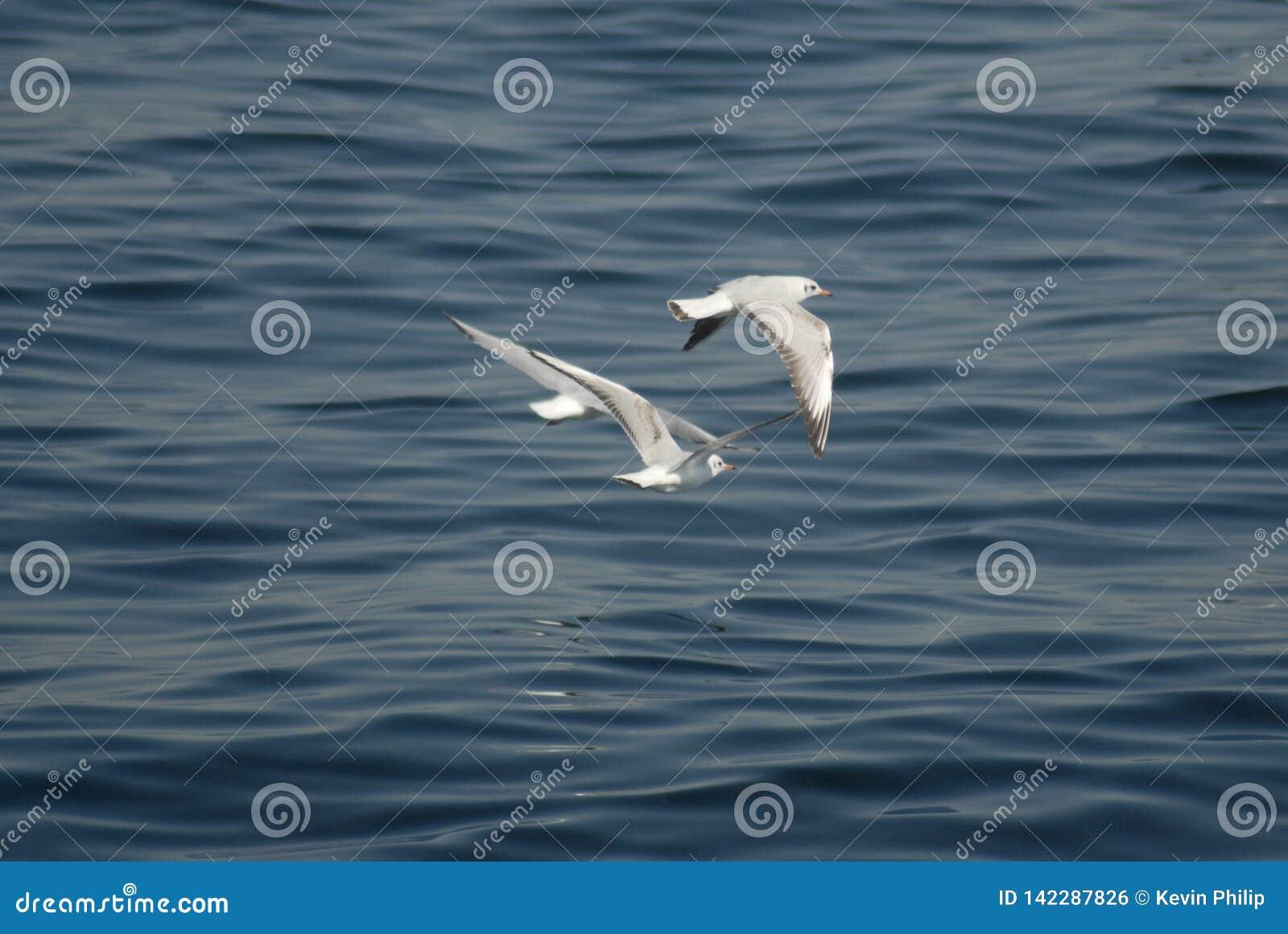 Pássaros que voam acima do oceano