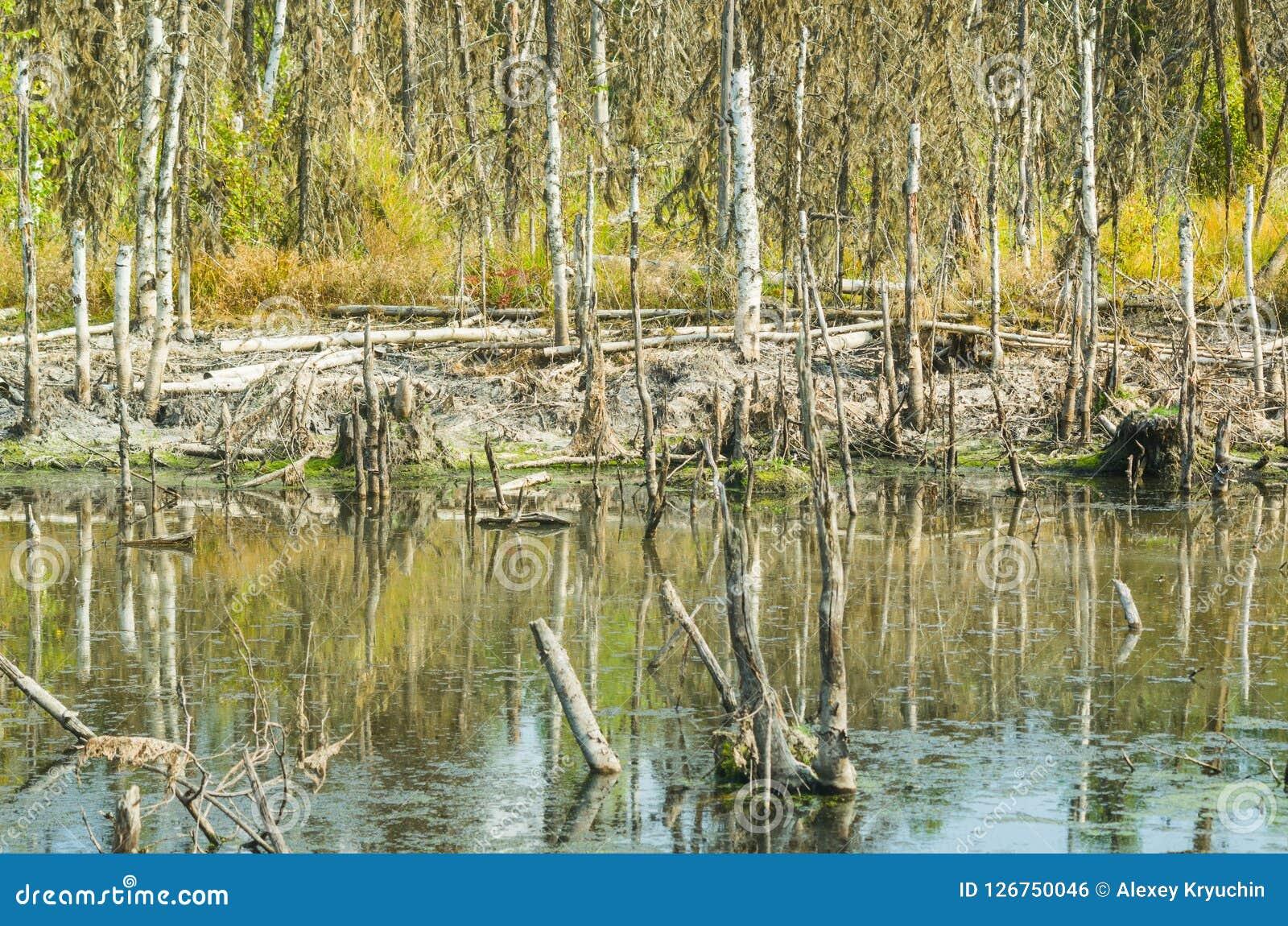 Pântano na região de Arkhangelsk, Rússia