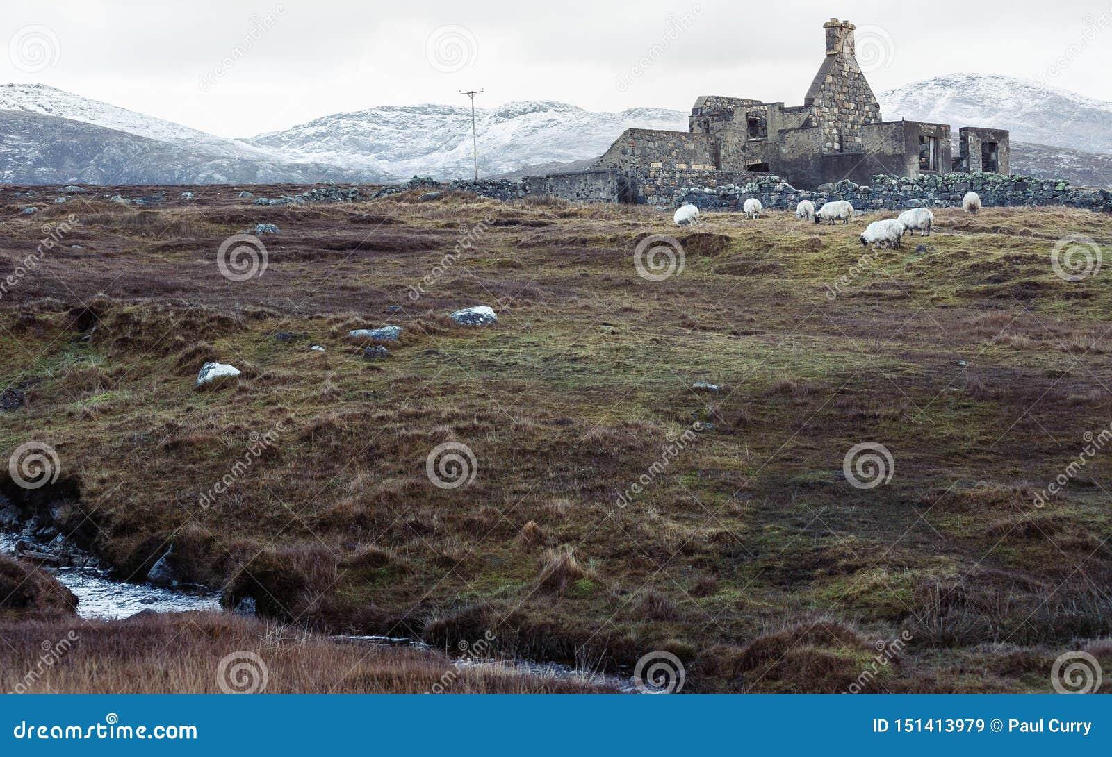 Pâturage sauvage avec les ruines