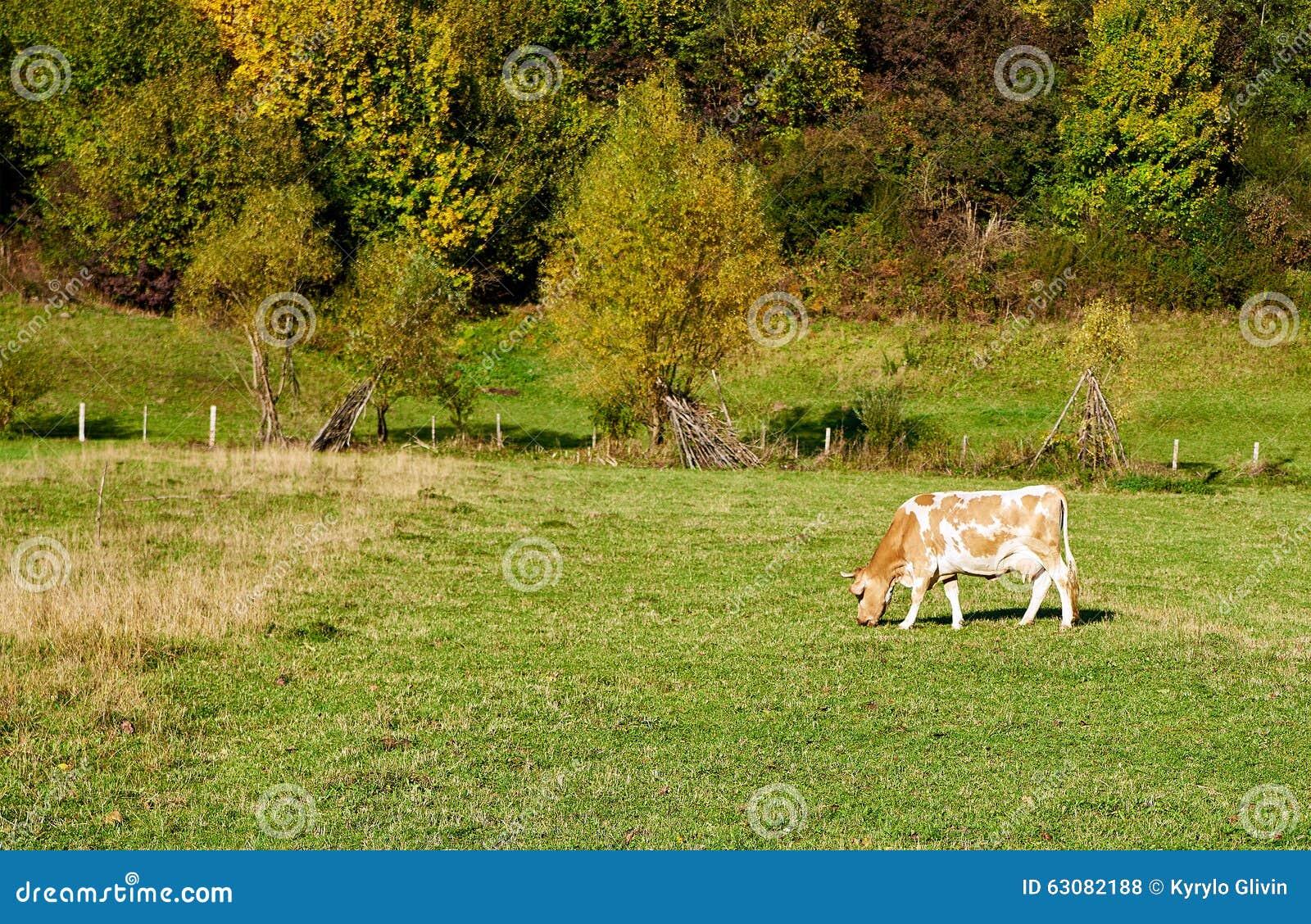 Download Pâturages De Vache Sur Le Champ De Ferme Photo stock - Image du vert, alpestre: 63082188