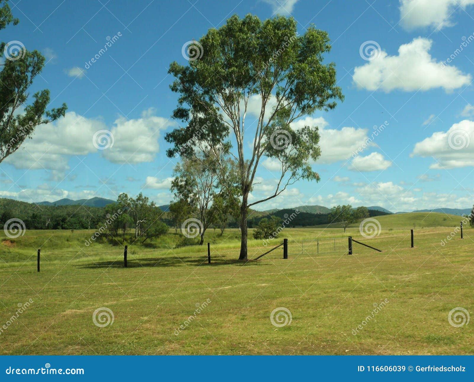 Pâturez le paysage avec des arbres et des barrières dans l Australie est avec des montagnes se situant à l arrière-plan brouillé