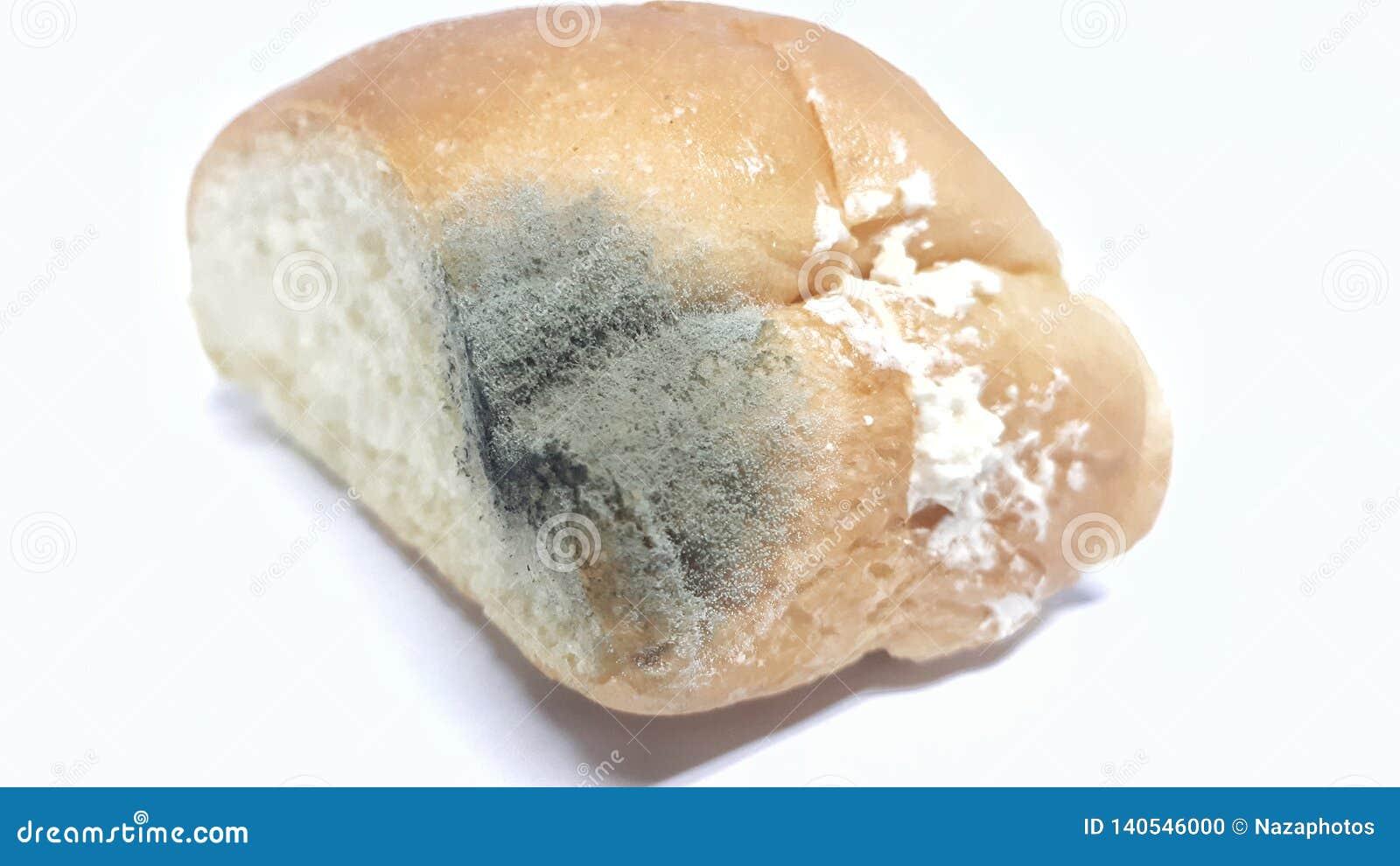 Pão expirado com fungo