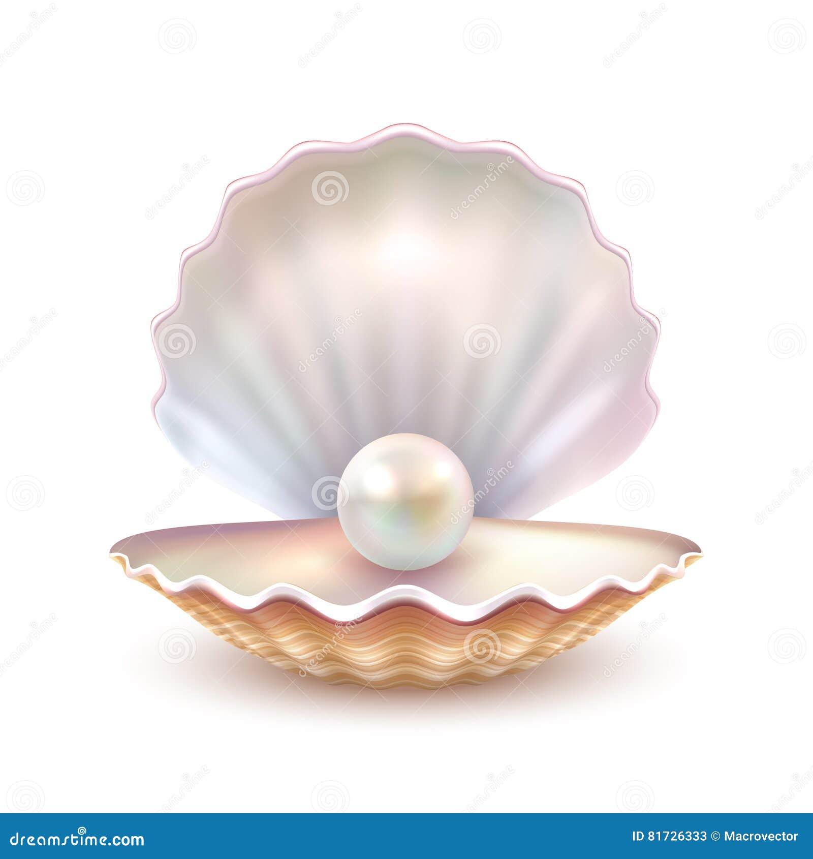 Pärlemorfärg Shell Realistic Close Up Image
