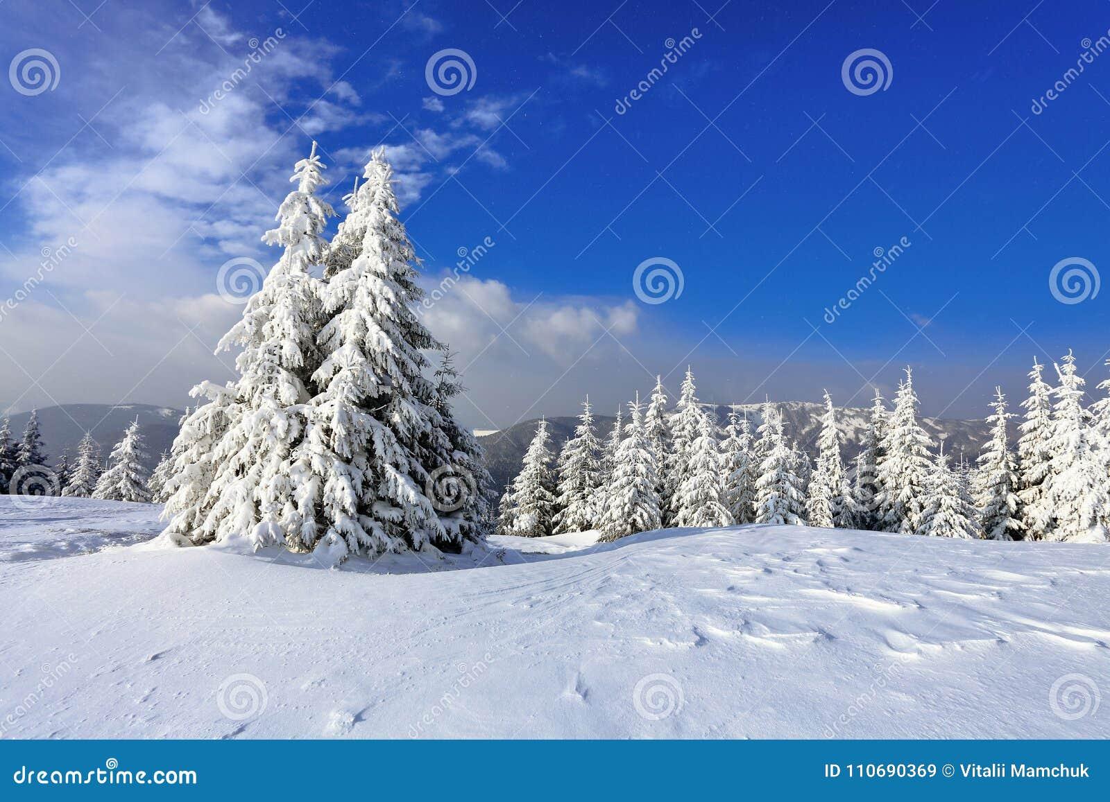 På en frostig härlig dag bland höga berg och maxima är magiska träd som täckas med vit fluffig snö