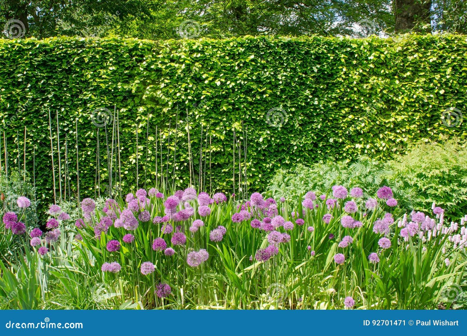 växter på engelska