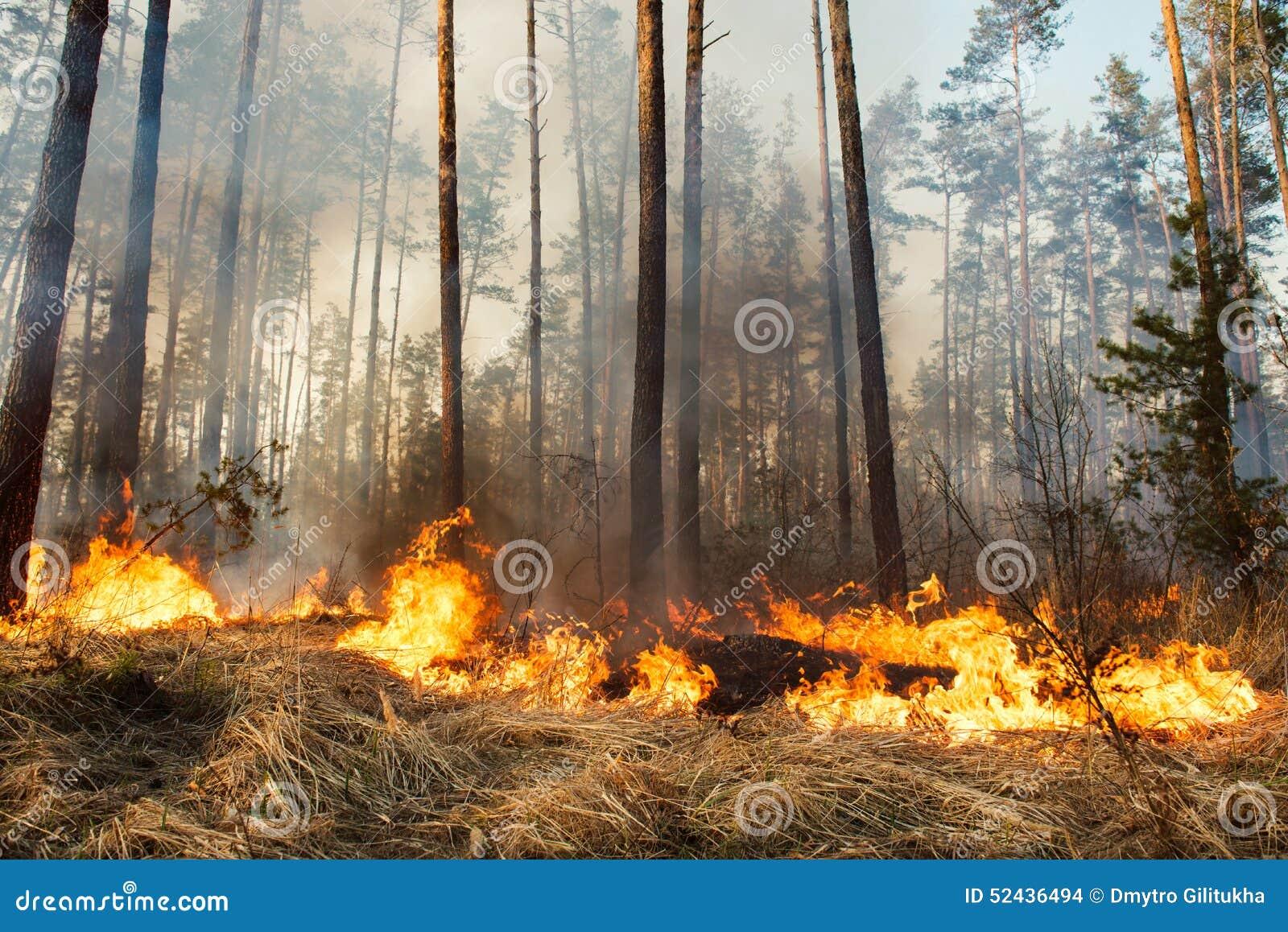 Pågående skogsbrand