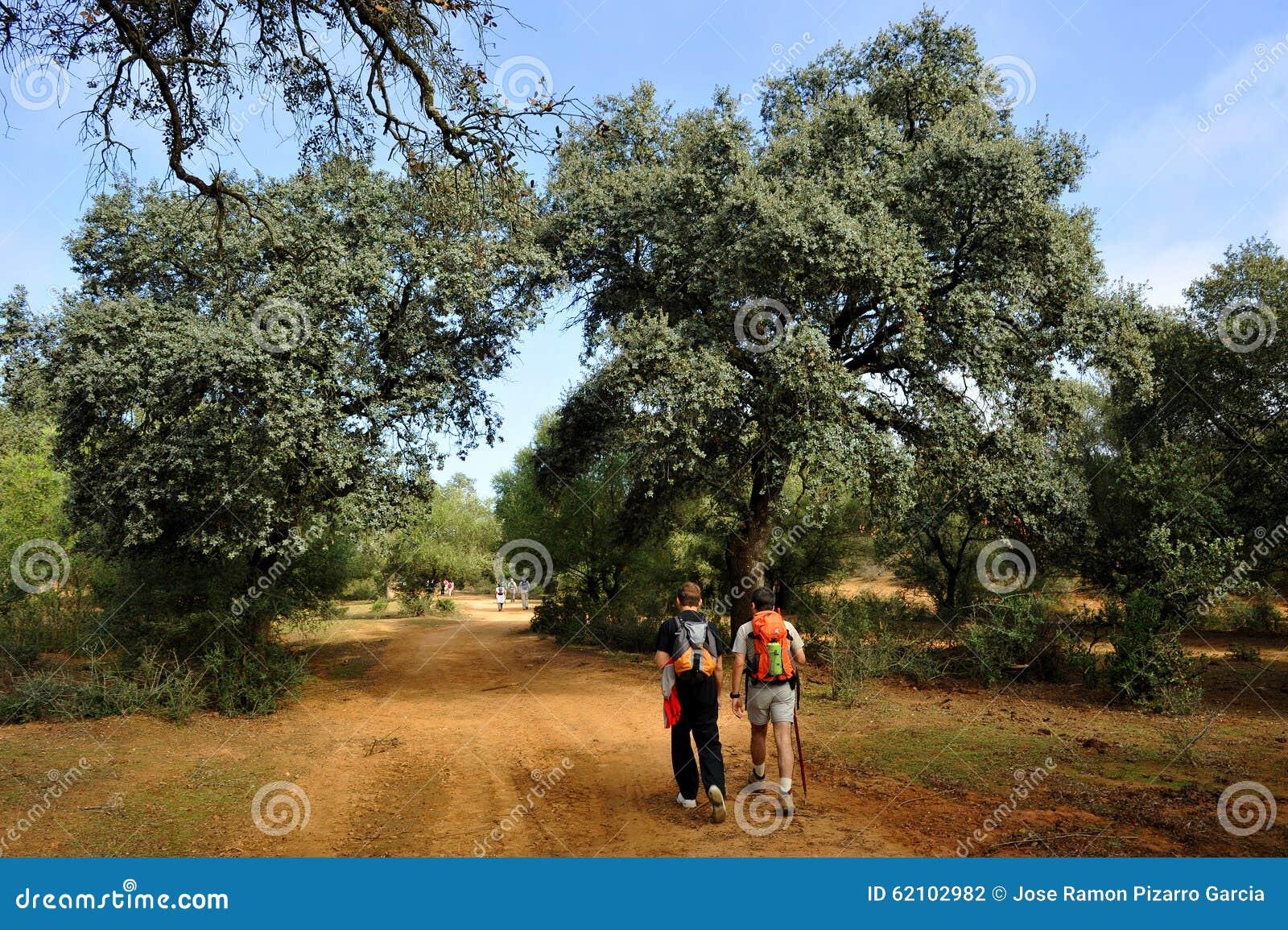 Pèlerins sur le chemin vers Santiago, Camino De Santiago, par l intermédiaire de De La Plata, l Espagne