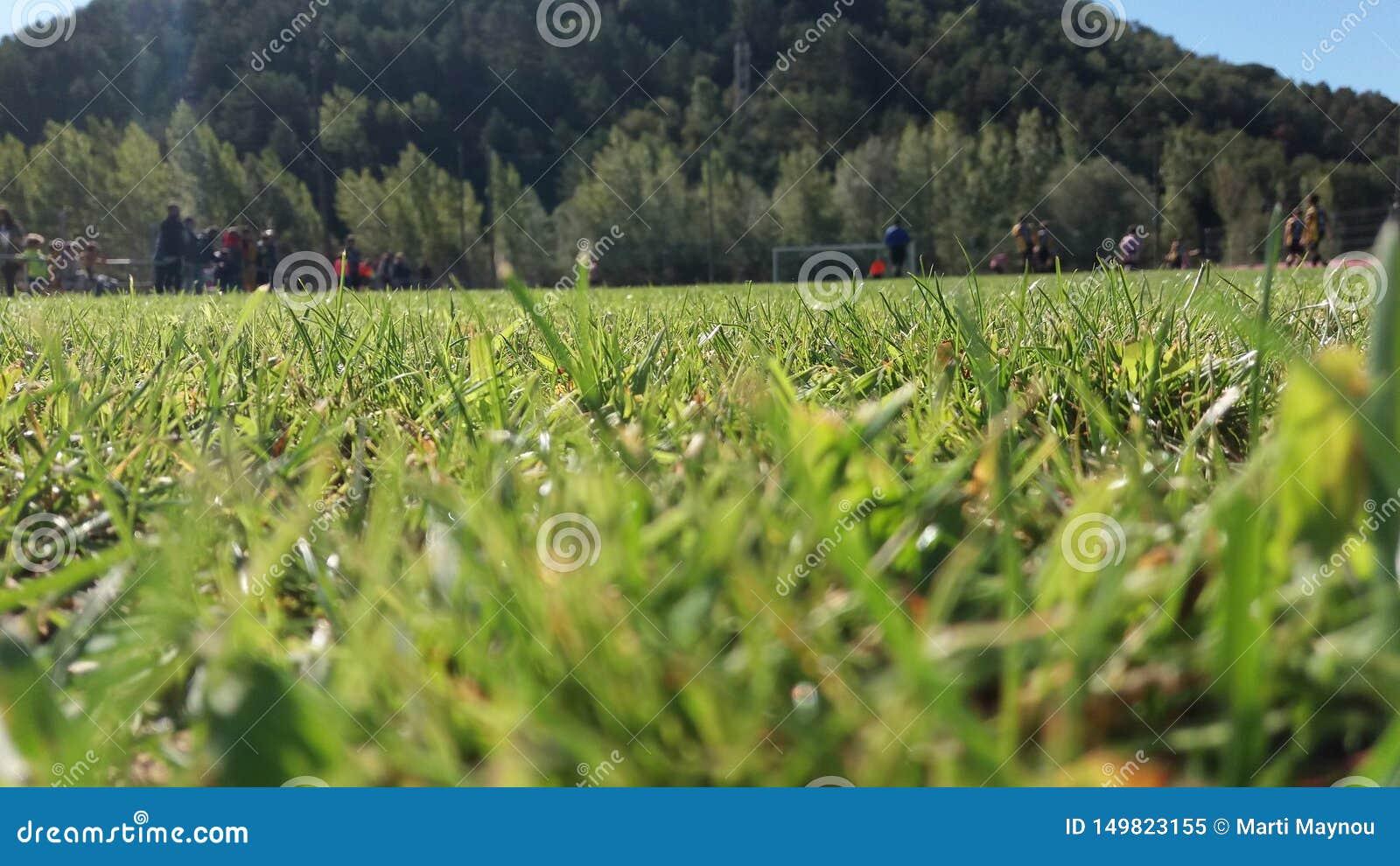 A pé do campo de grama