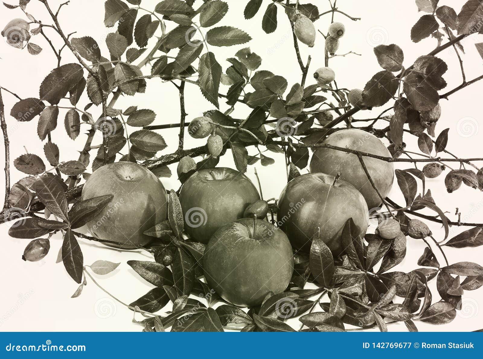 Pékin, photo noire et blanche de la Chine Automne pommes Composition en automne se composant des pommes et des feuilles
