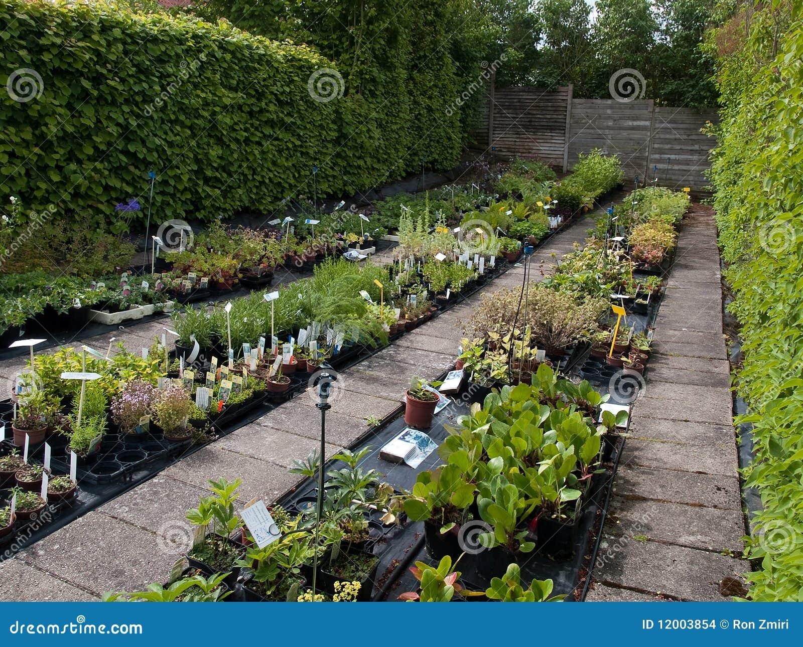 P pini re de centrales de jardin avec l 39 irrigation images stock image - Systeme irrigation jardin ...