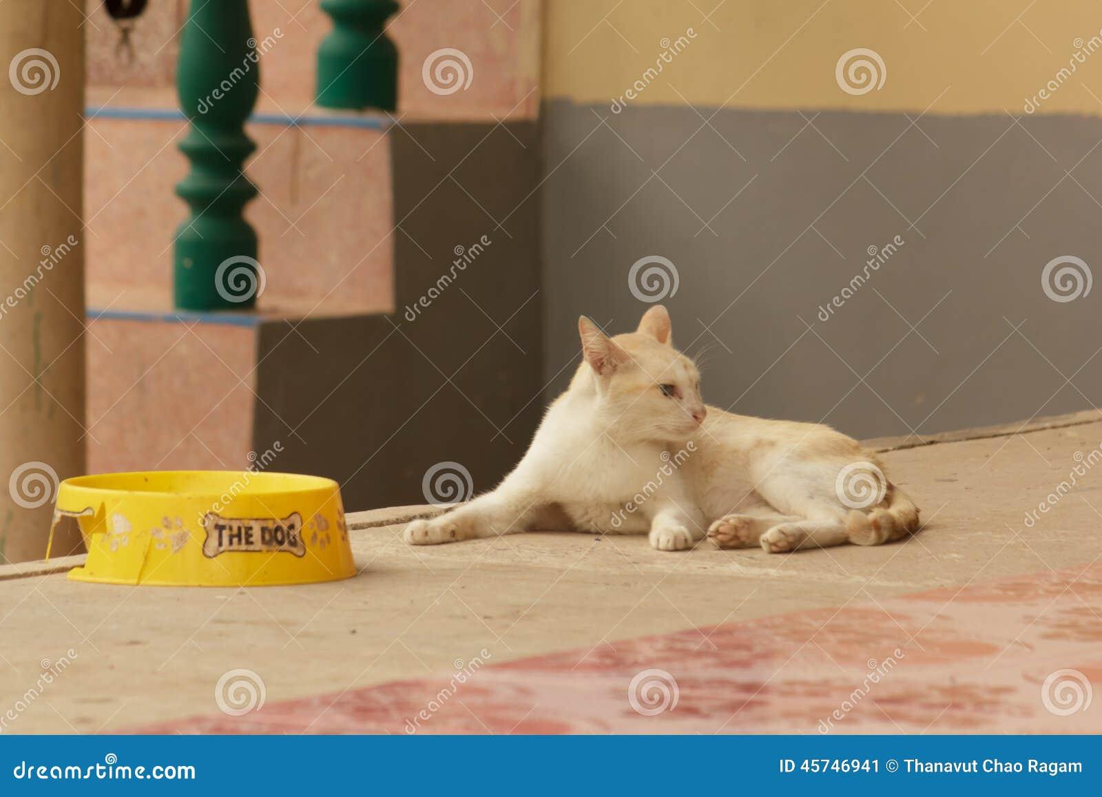 Pérdida del gato de apetito