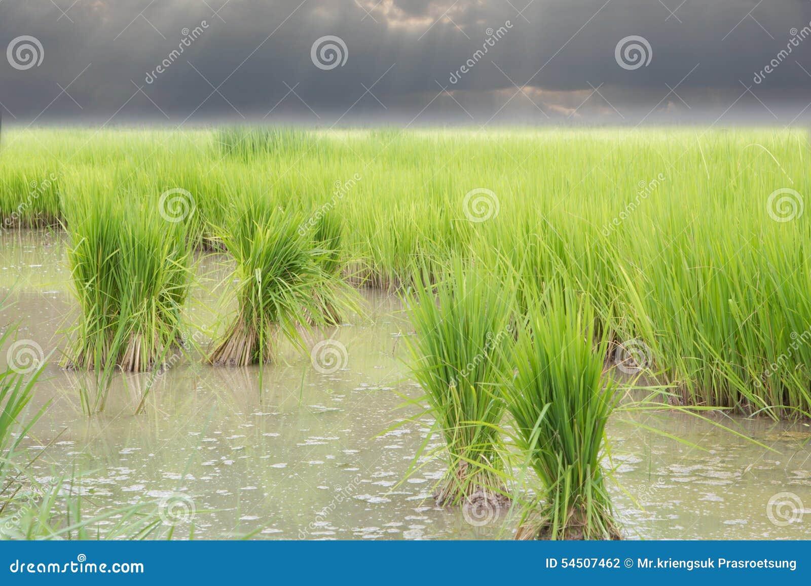 Période de végétation