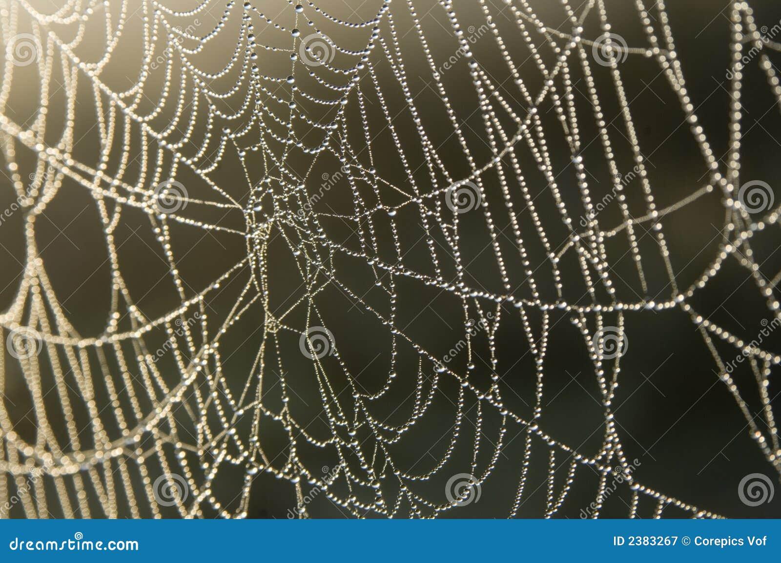 Pérola-como gotas de orvalho em um Web