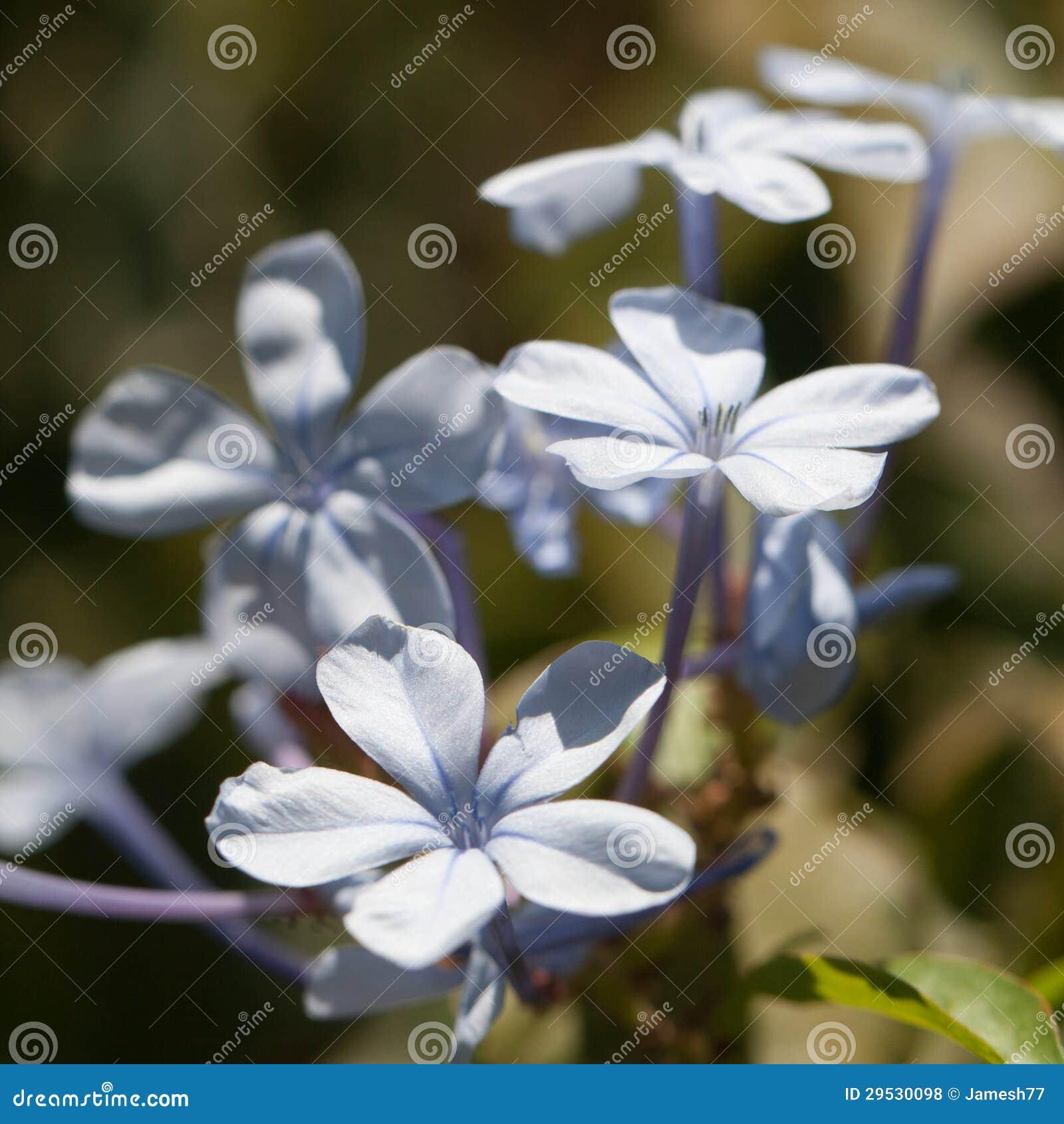 Pétalas azuis delicadas