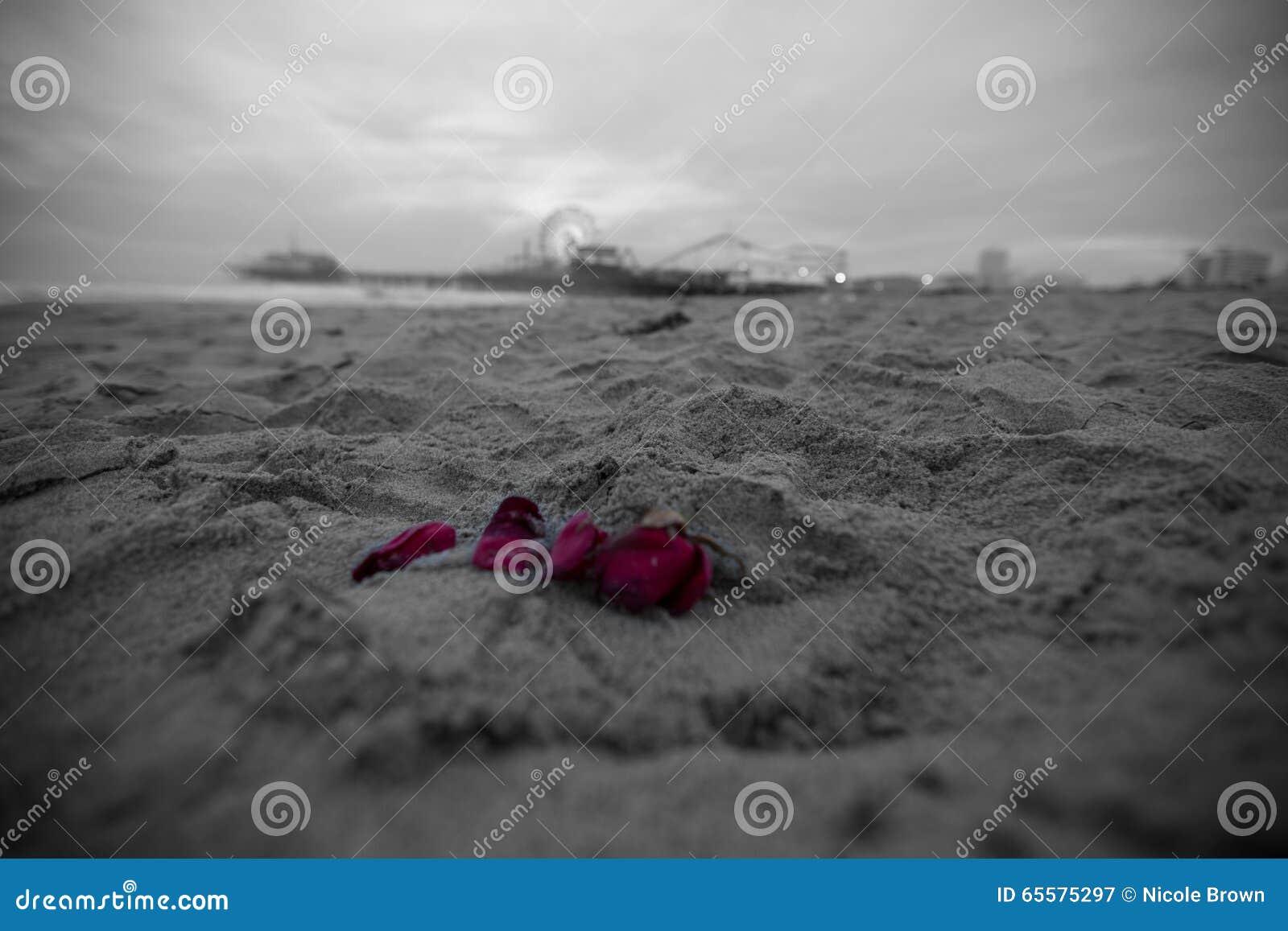 Pétalas cor-de-rosa