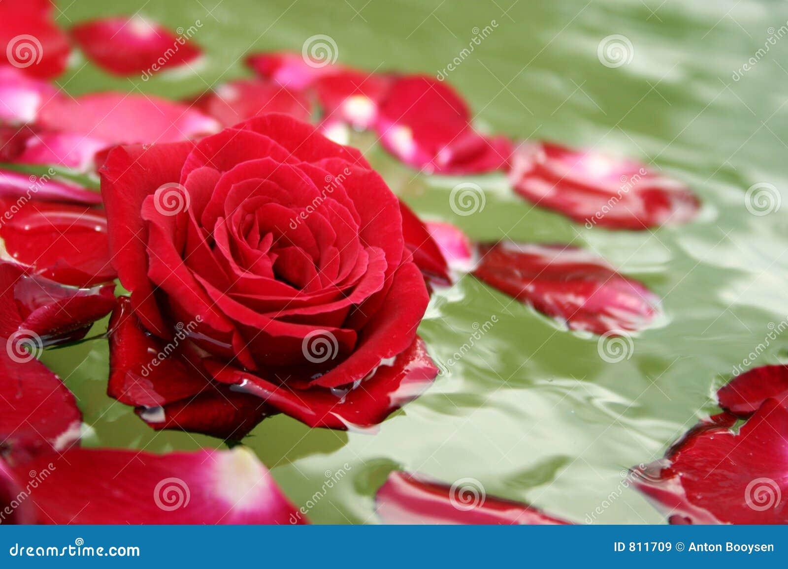 Pétalas cor-de-rosa de flutuação