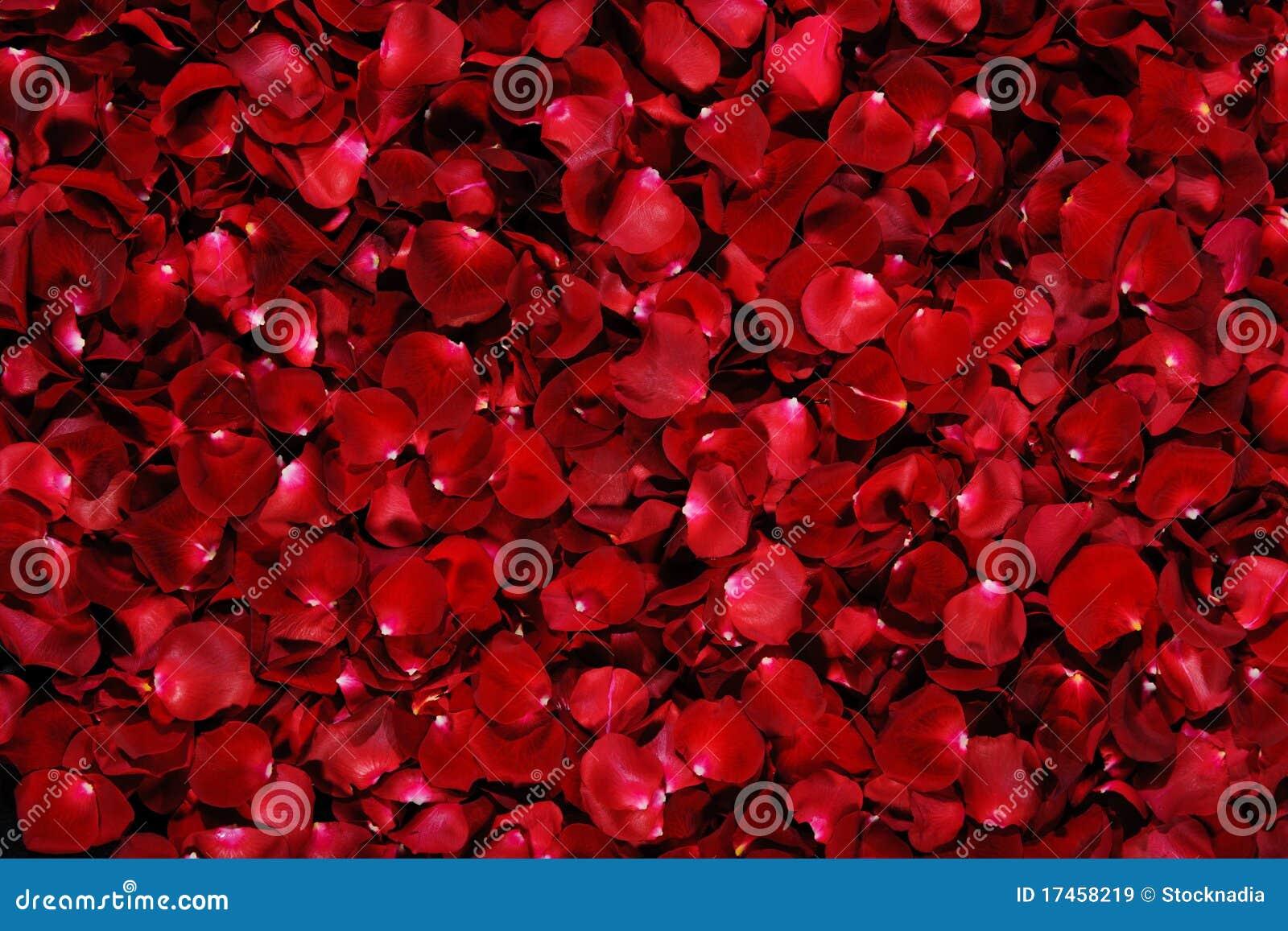 Pétalas cor-de-rosa vermelhas