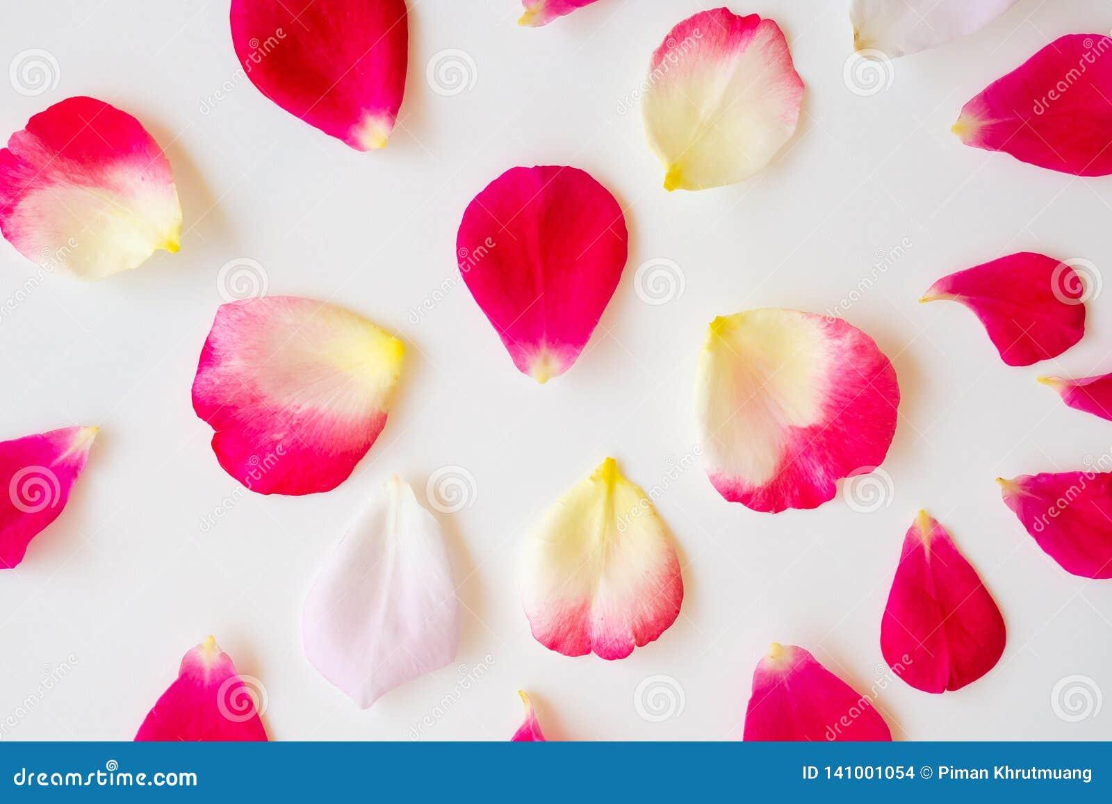 Pétalas cor-de-rosa vermelhas no branco