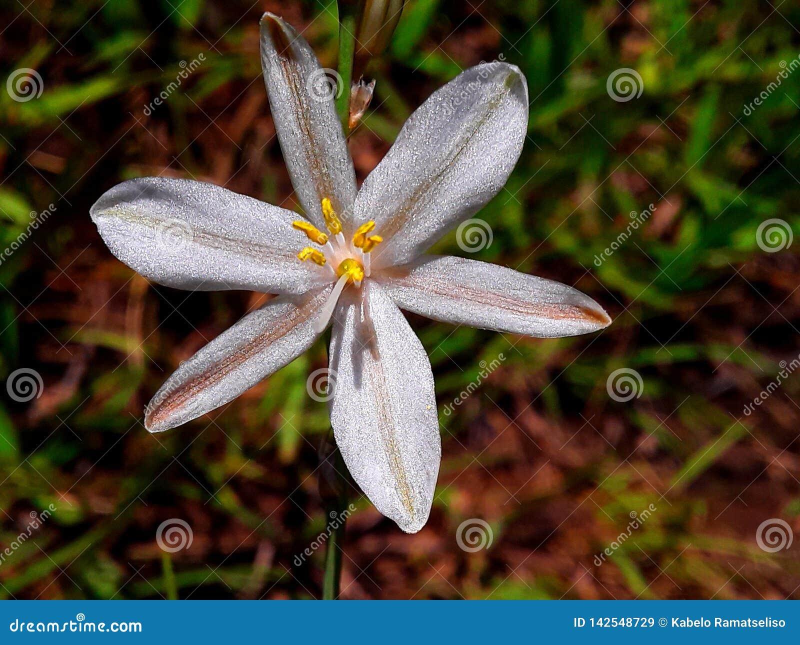 Pétalas da flor da grama verde