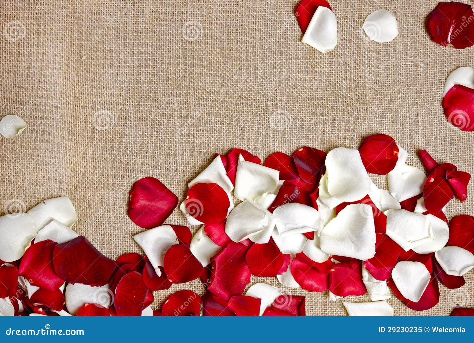 Download Pétalas de Rosa no linho imagem de stock. Imagem de textile - 29230235