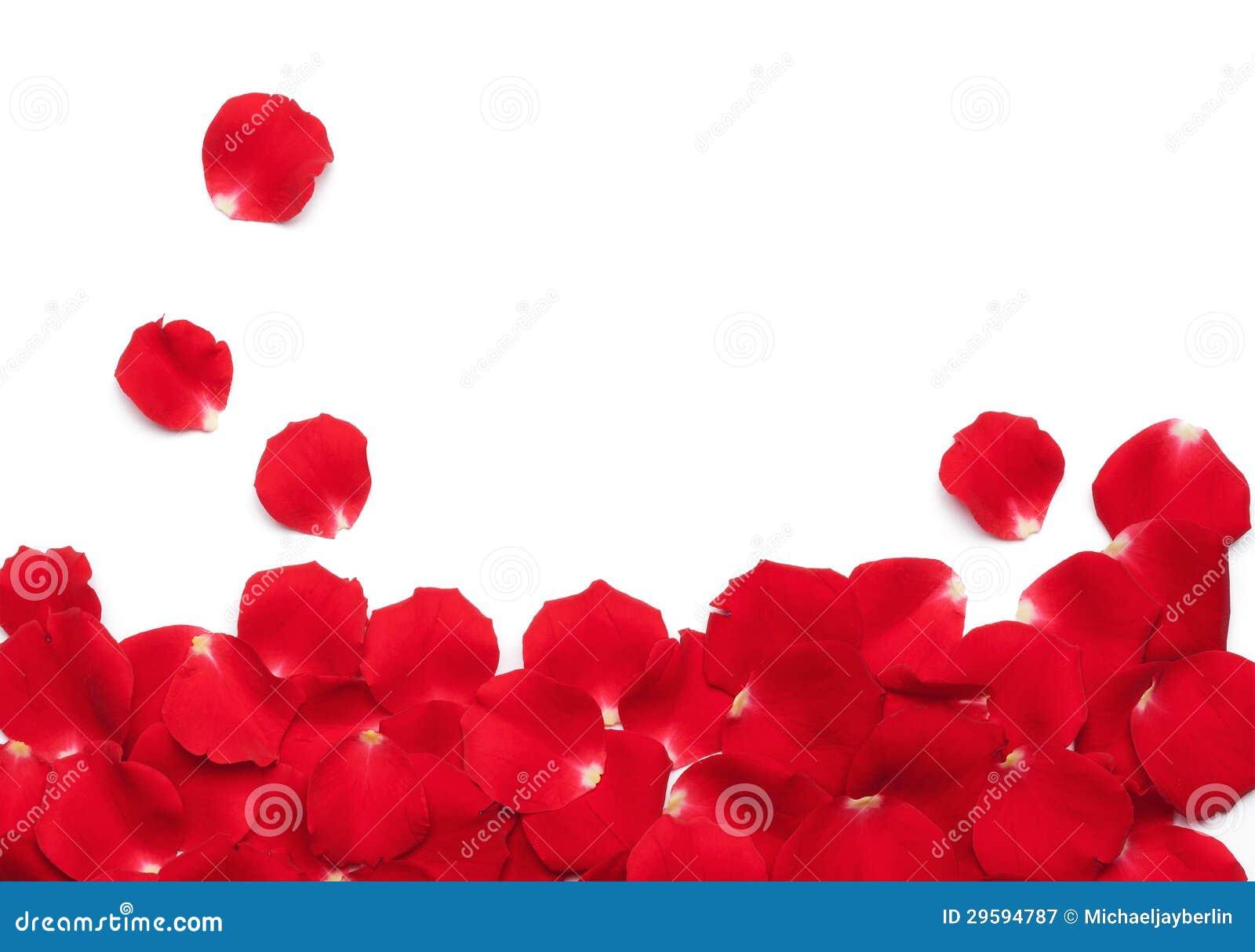 Pétalas de Rosa vermelha