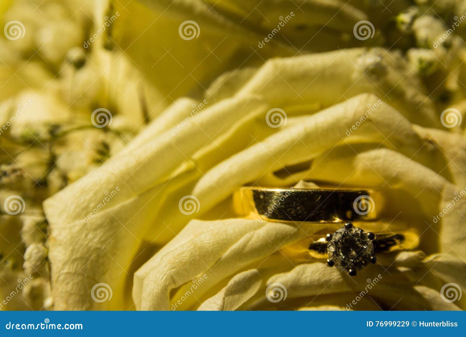 Pétalas douradas da flor do amarelo de Diamond Wedding Rings Together Bright